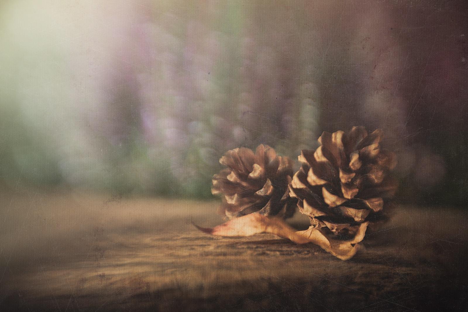 Pinecones by Rosana