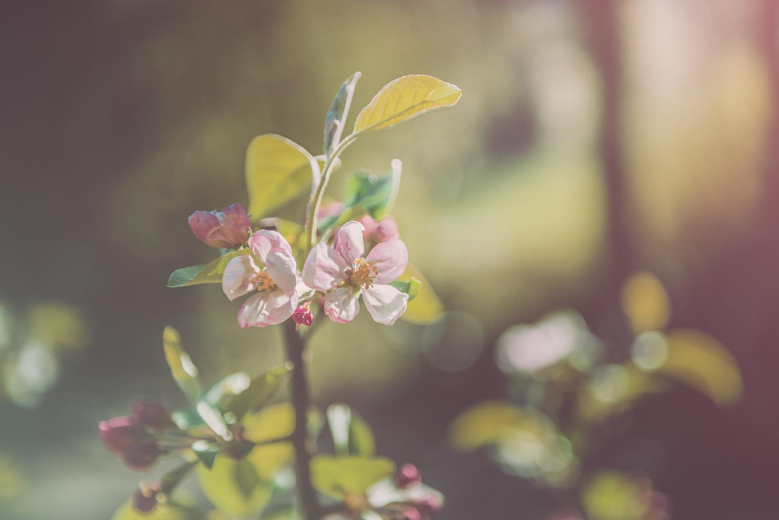 Spring Sunshine by Rosana