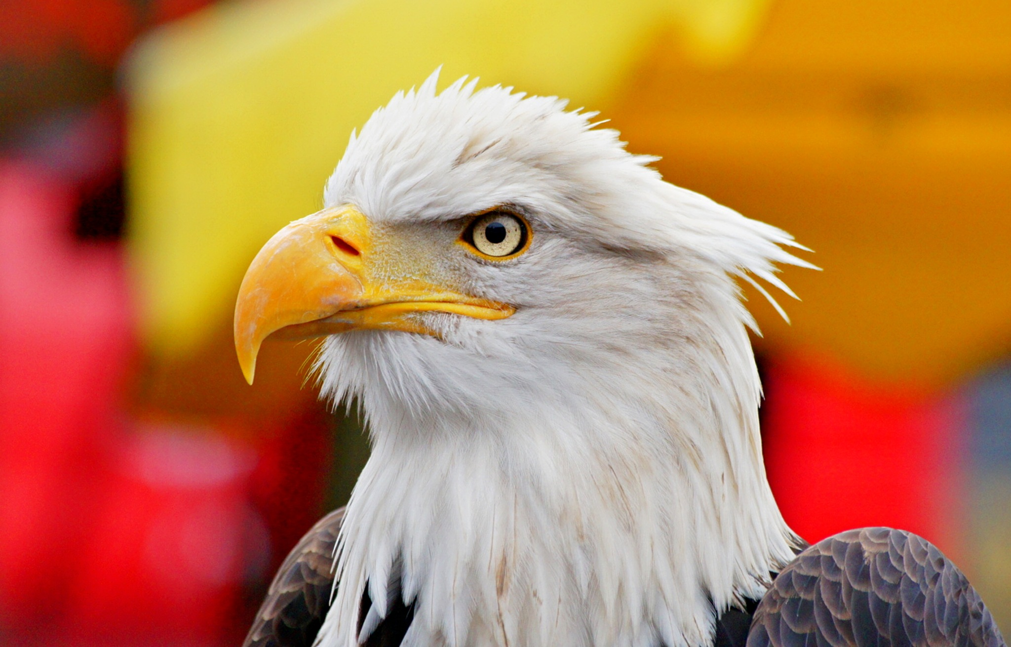 Sea Eagle by TOBE-Photography