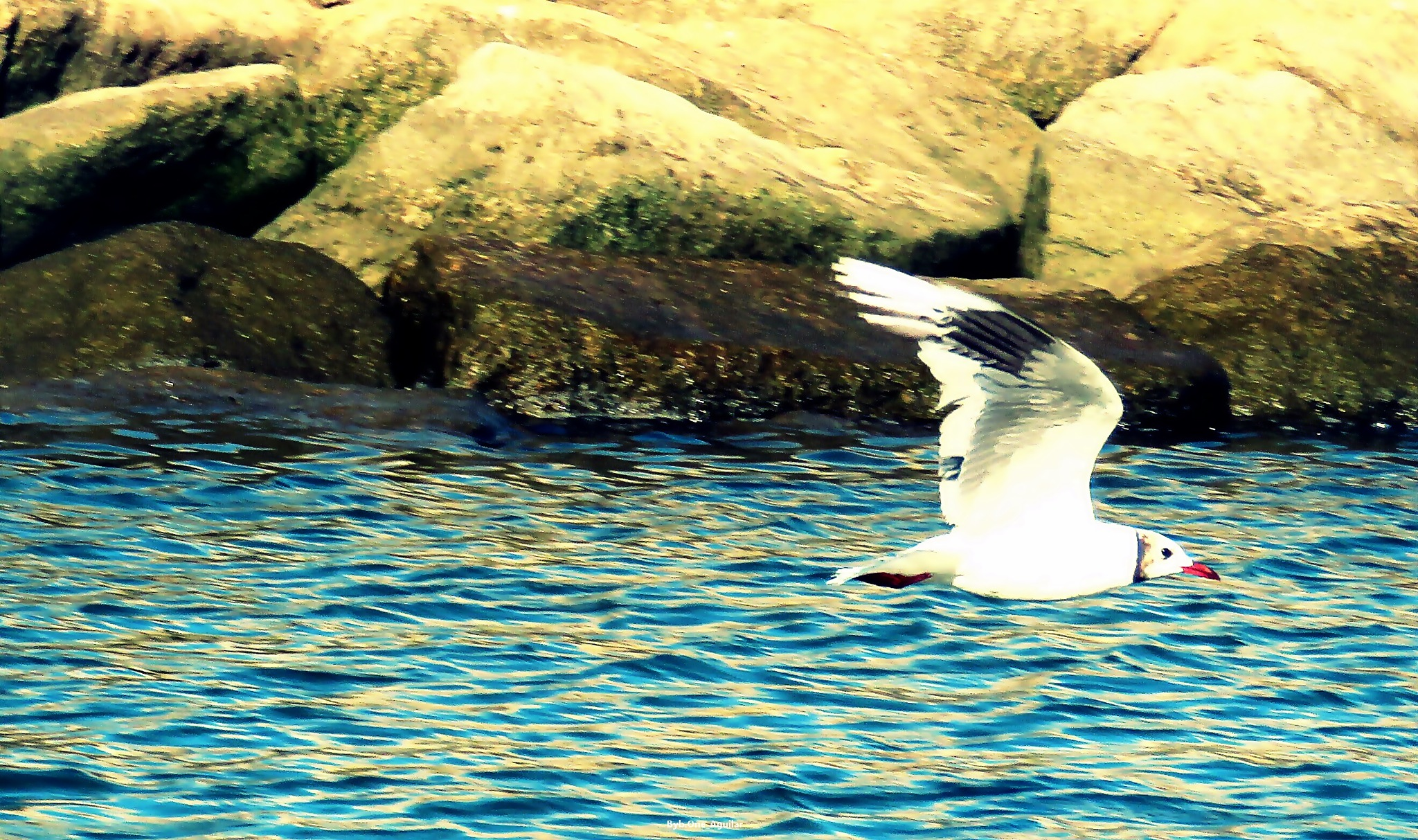 vuelo by Byb.One_Aguilar