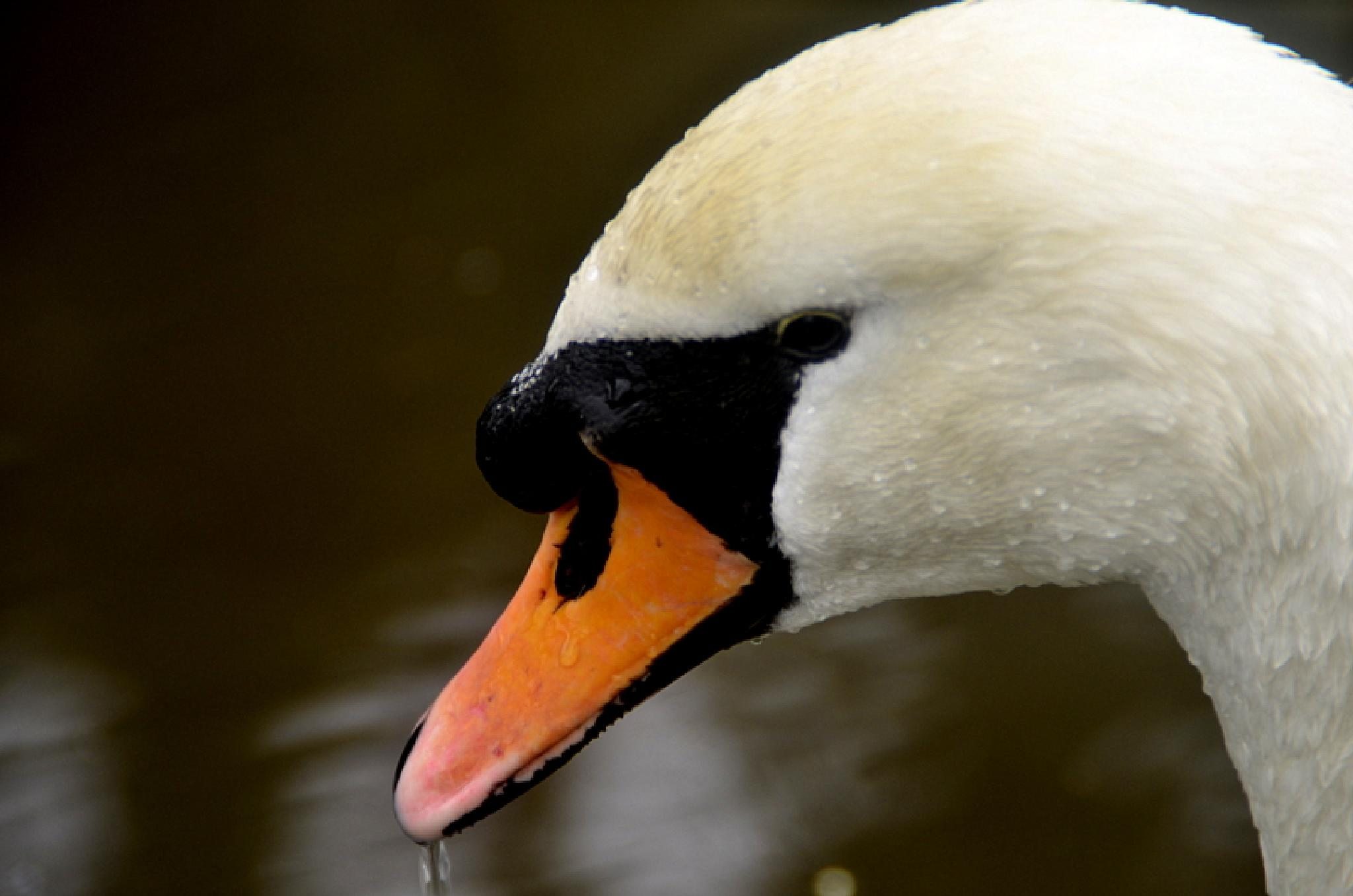 the ugly duckling by NKCPHOTOGRAPHY