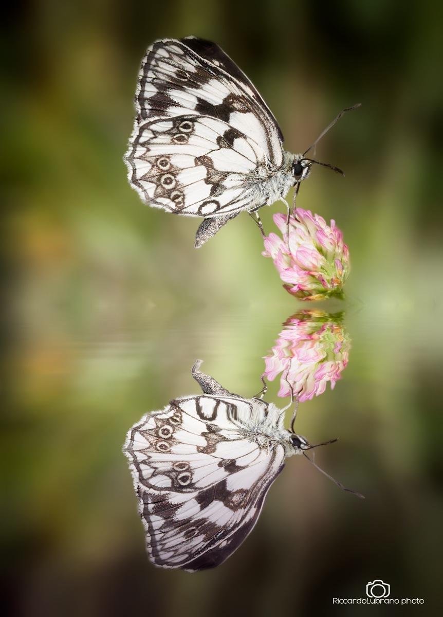 Butterfly by riccardolu