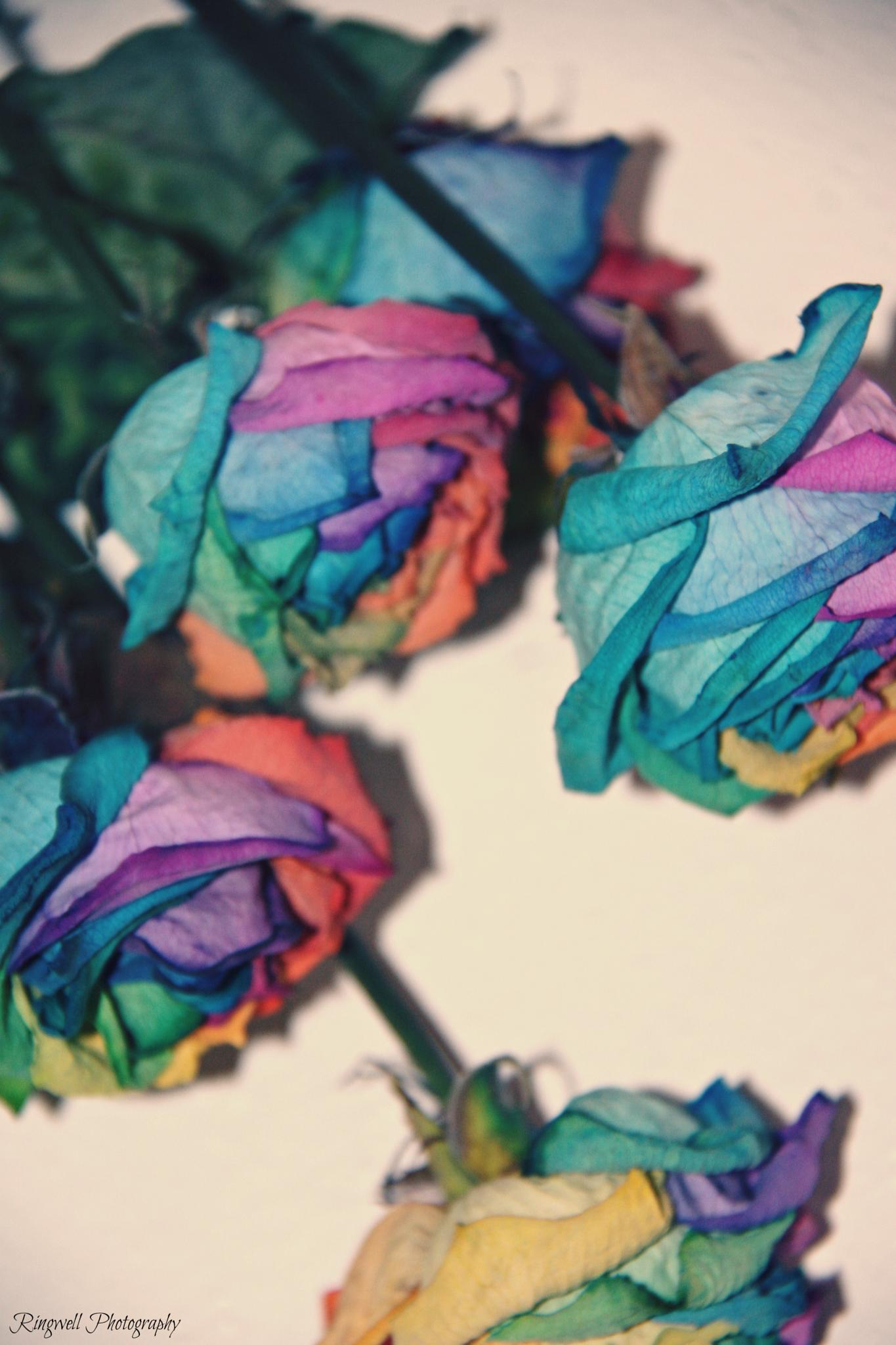 Rainbow Flowers by Marissa Sue Ringwell