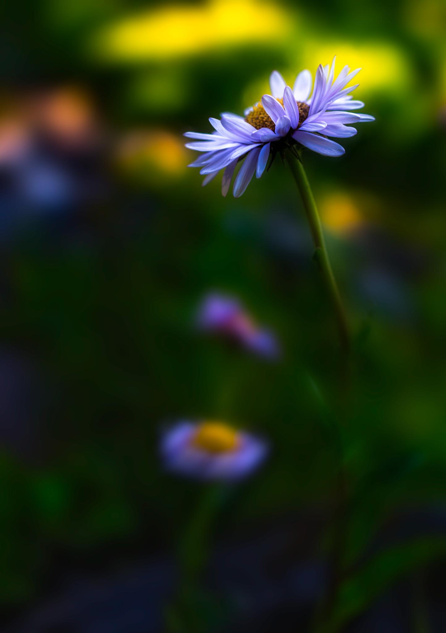wild flower by Jason Matias