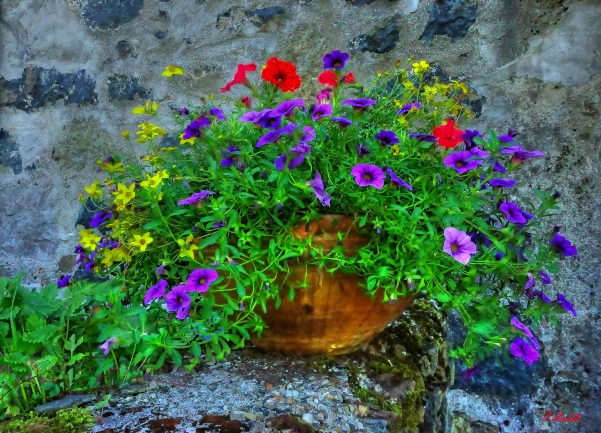 petit fleurs by sunrisesunset