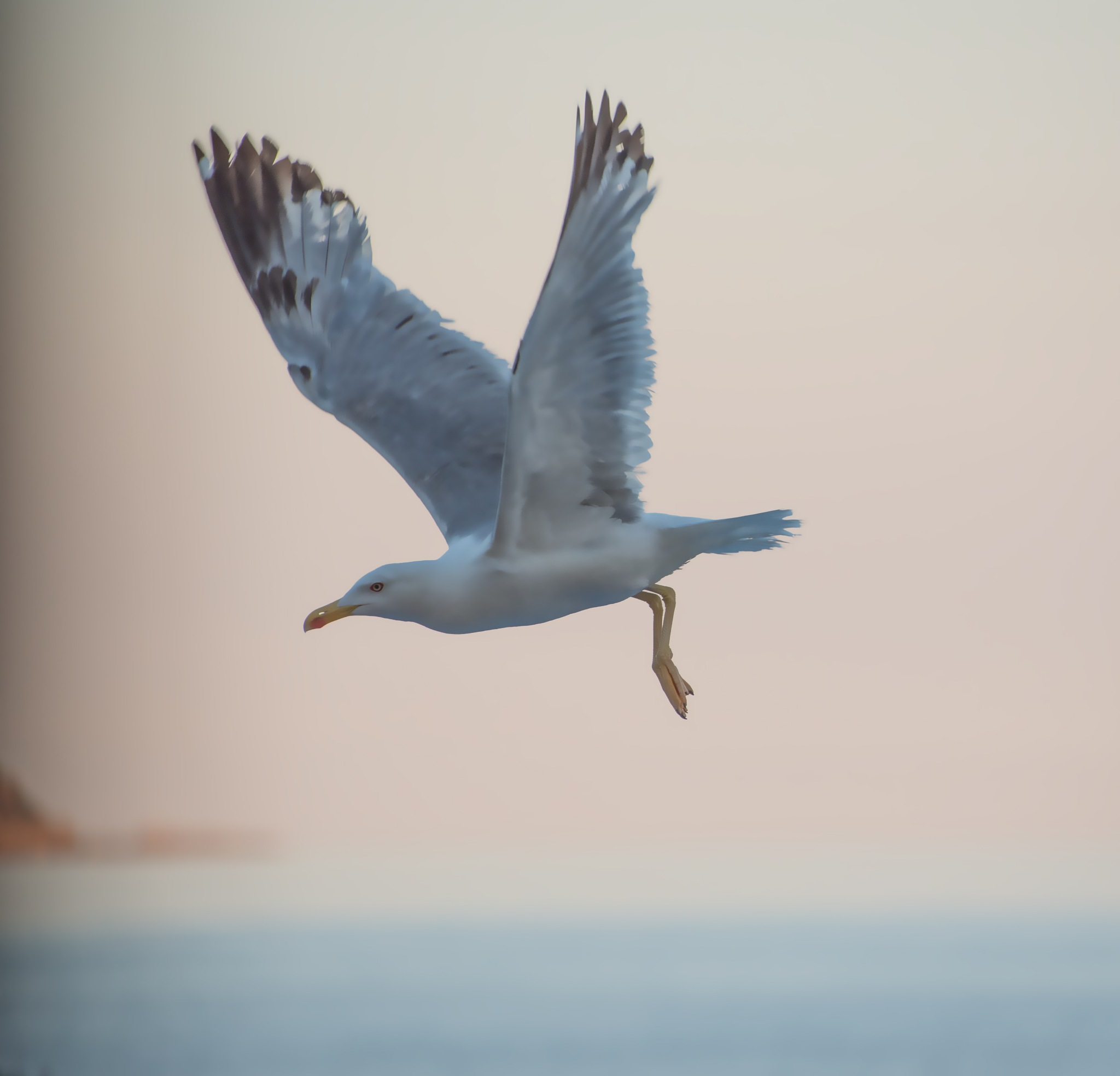 gull flying at dawn by sunrisesunset