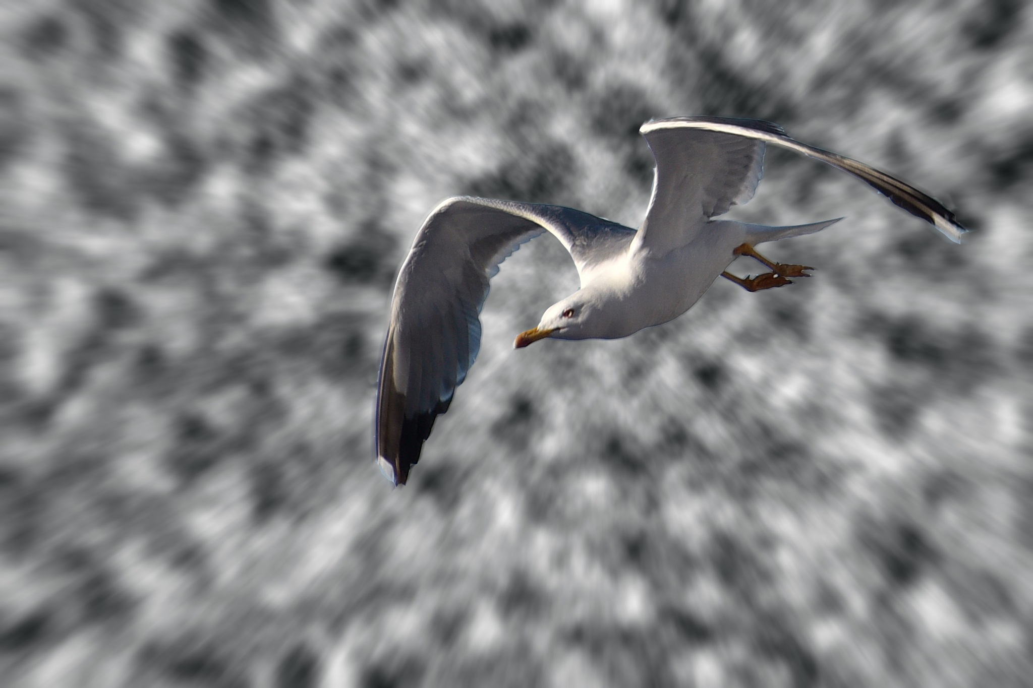 seagull in the clouds by sunrisesunset