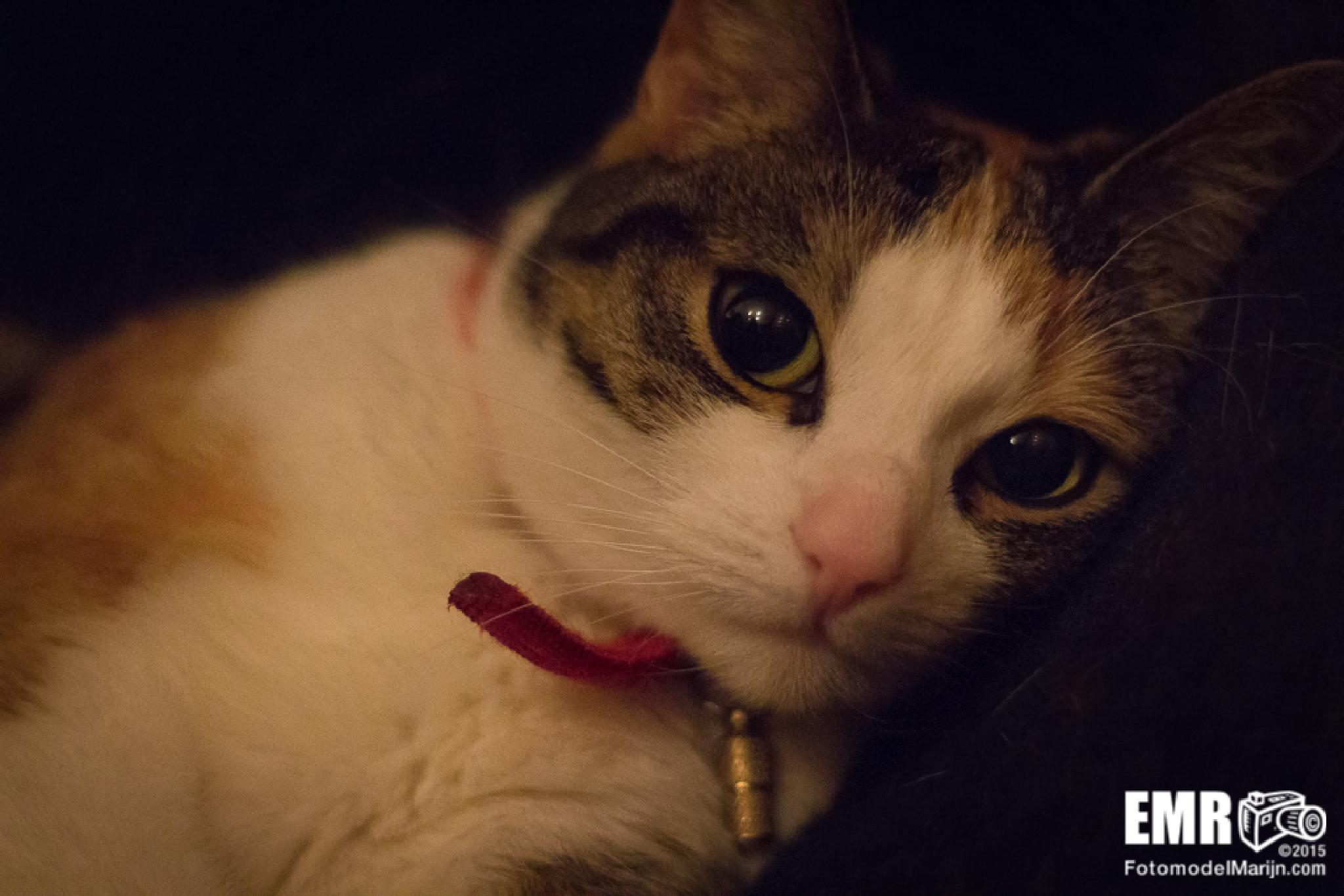 Cat by EMR Photography & Fotomodel Marijn
