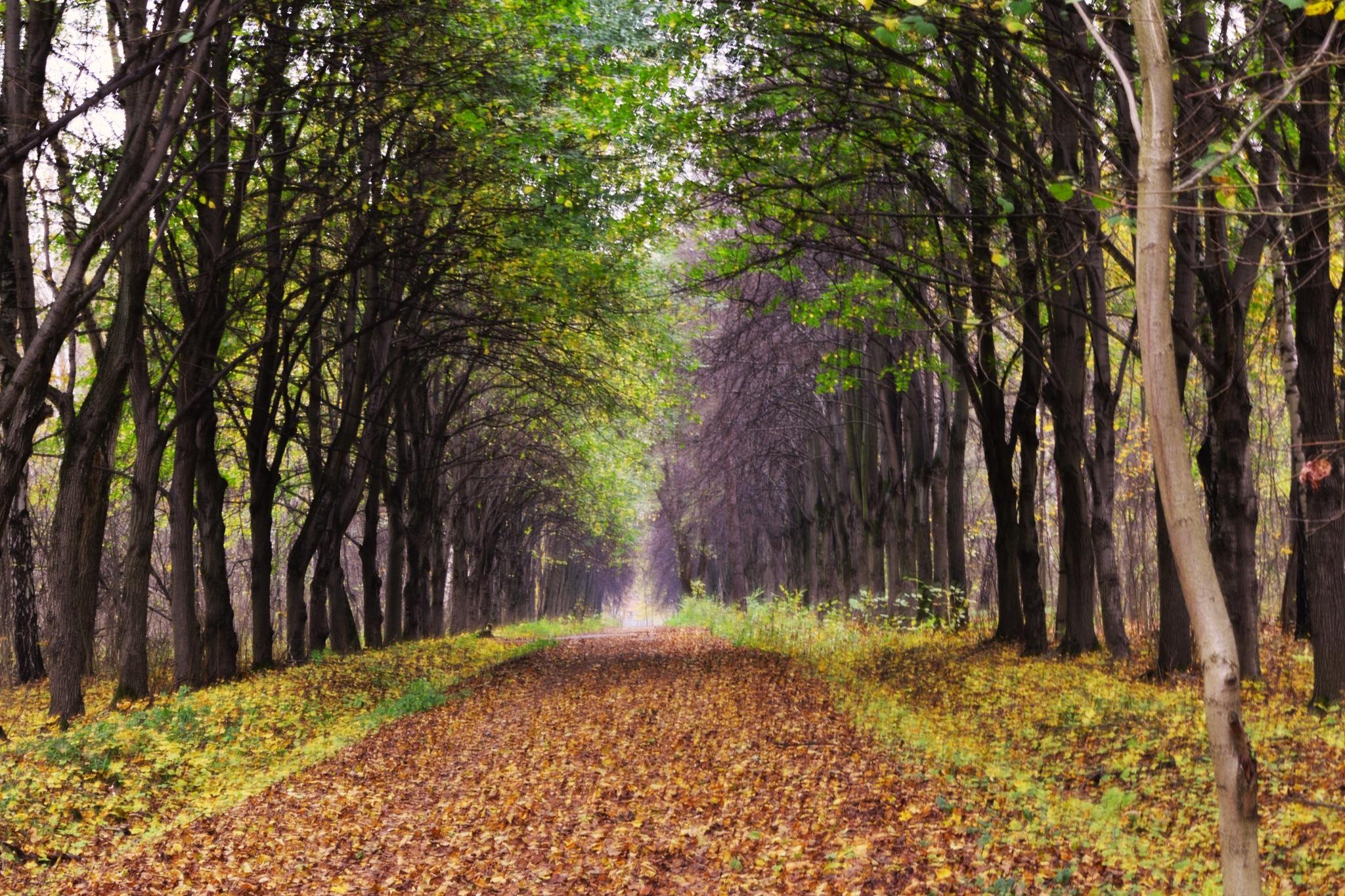 Photo in Landscape #haze #autumn #landscape #nikon #warm #evening #shady alley #moscow #tree #walkway #nature #park #fallen leaves #colors #парк #опавшая листва #природа #осень #краски #москва #прогулочная дорожка #дерево #вечер #тенистая аллея #дымка #пейзаж