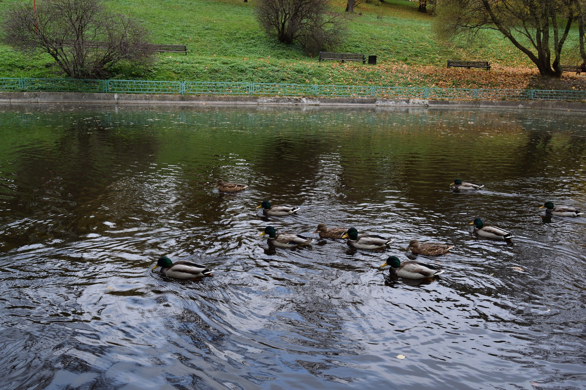 Autumn in Kolomenskoye. Pond with ducks. by Andrey Gordeeff