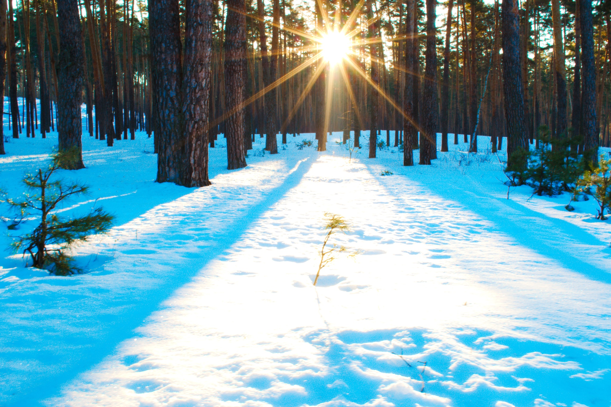 Winter landscape. The rays of the sun, make their way between the crowns of the trees and play in th by Andrey Gordeeff