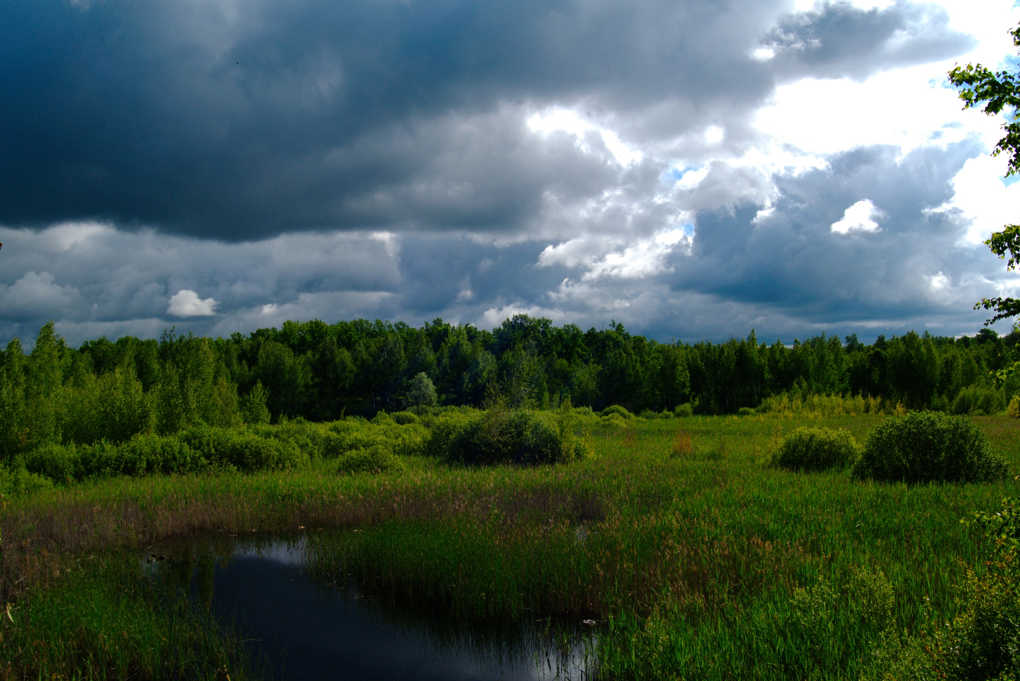 Summer landscape. Cloudy morning in the swamp. by Andrey Gordeeff