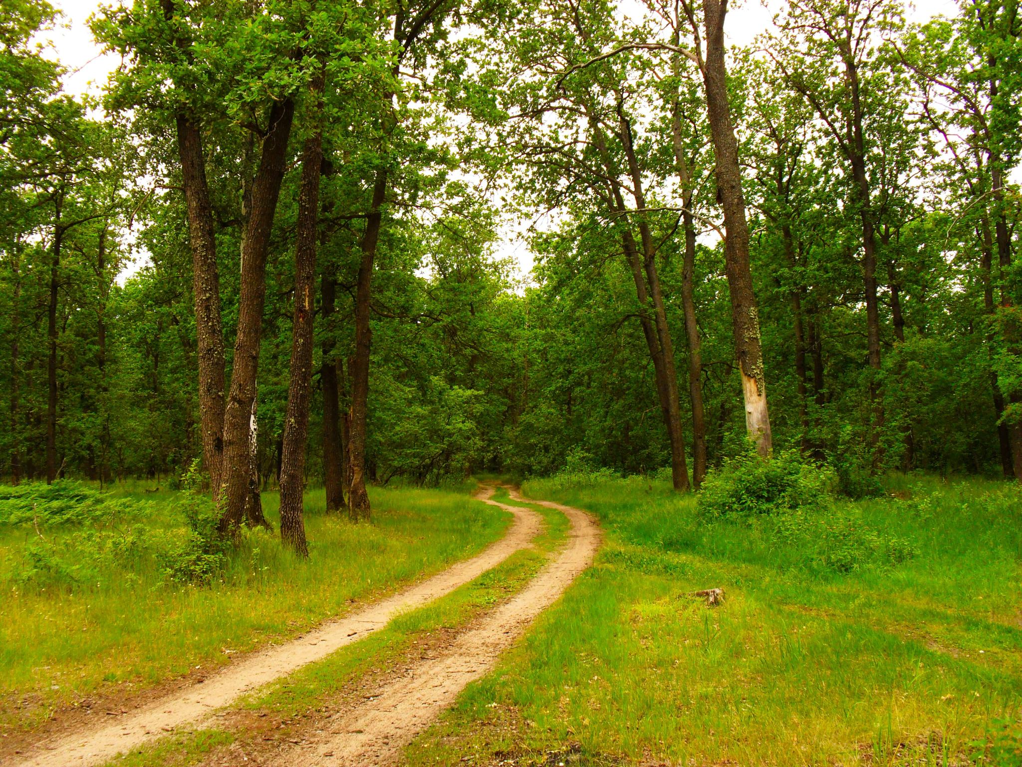 Summer landscape. Forest road. by Andrey Gordeeff