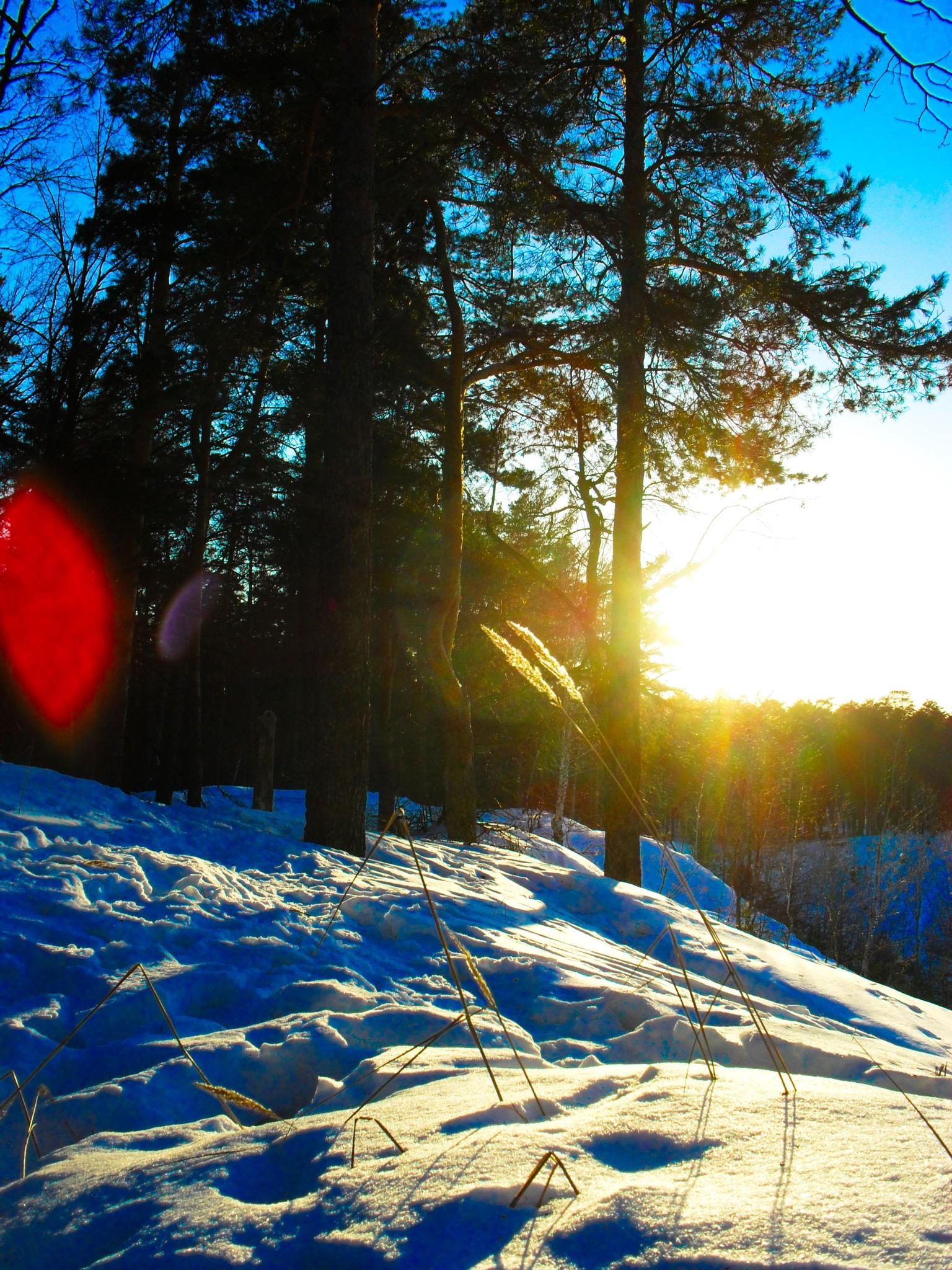 Winter landscape. Sunny day. On a snowy slope. by Andrey Gordeeff