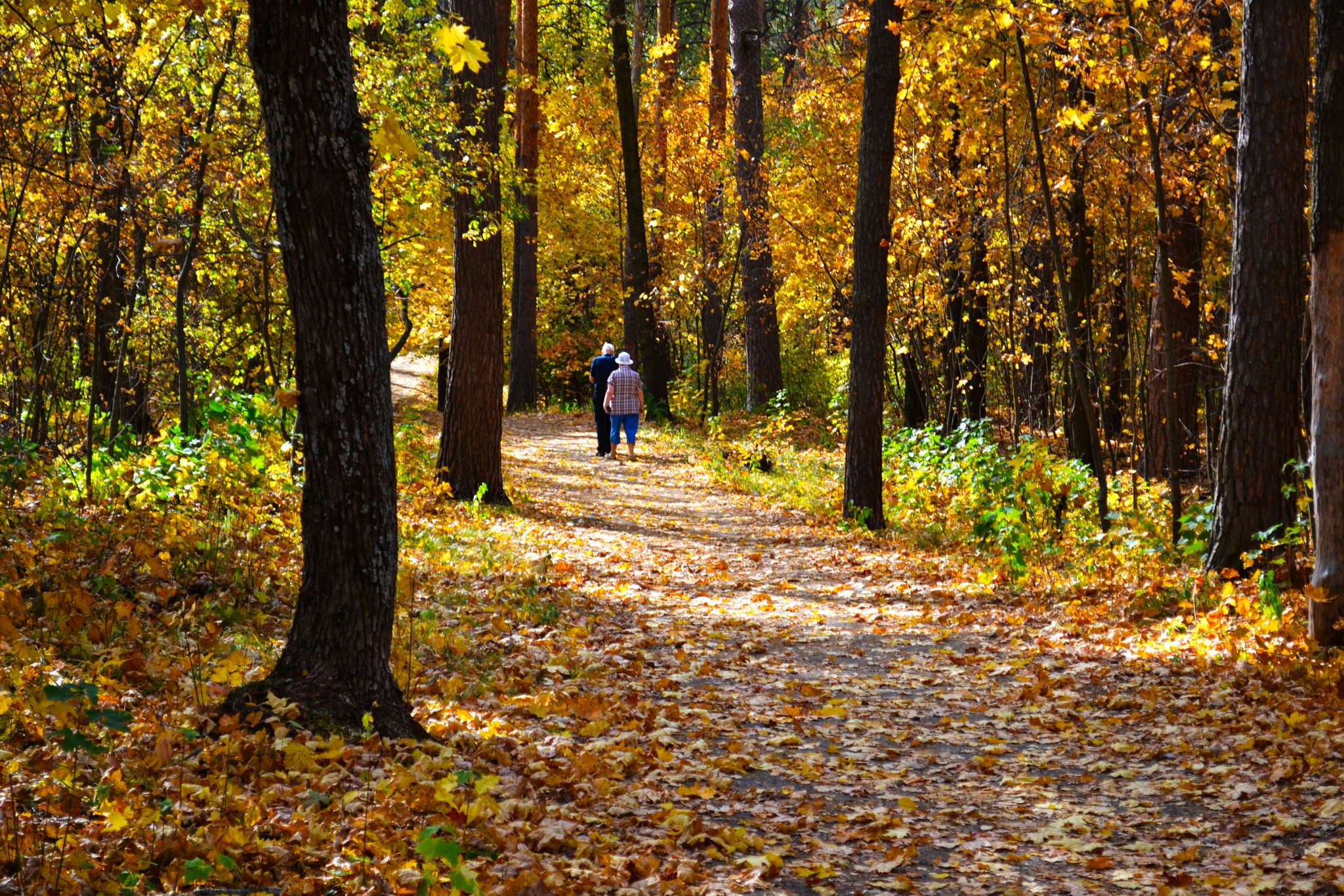 "Elderly couple walking in the ""golden"" autumn forest. by Andrey Gordeeff"