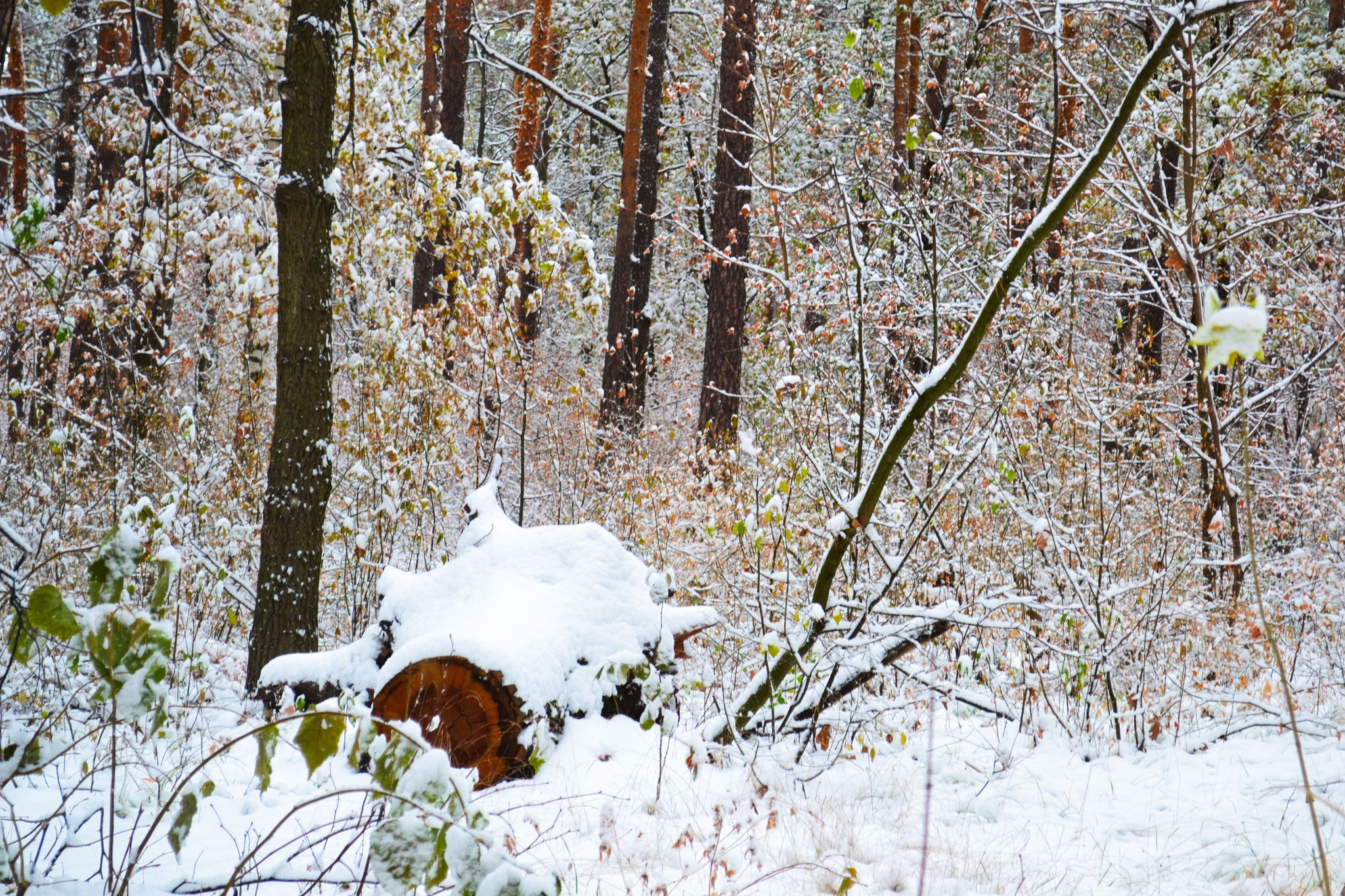 Autumn landscape. Suddenly, snowy morning. In the forest. by Andrey Gordeeff