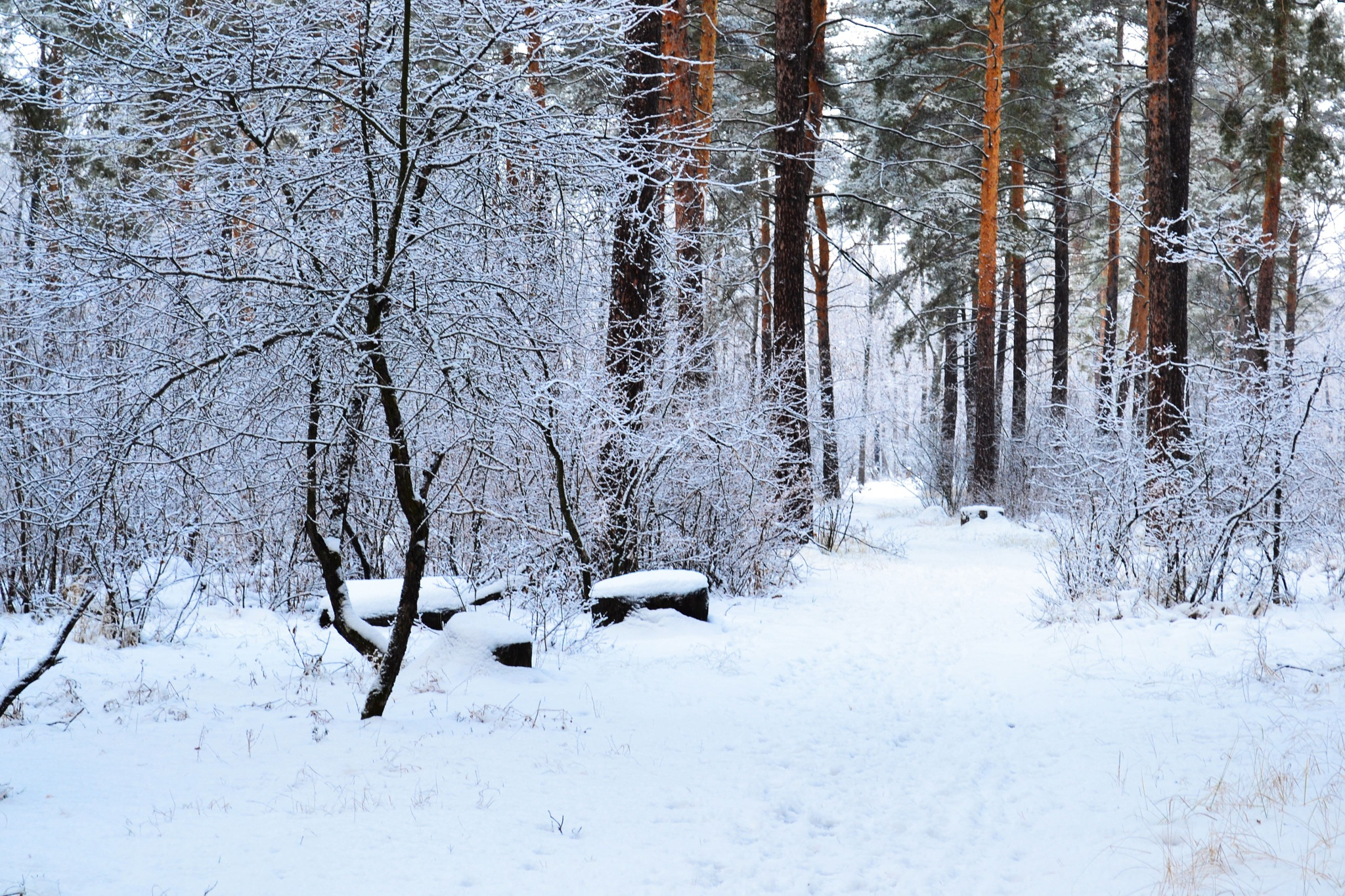 Autumn landscape. Morning in the forest. After a snowstorm. by Andrey Gordeeff