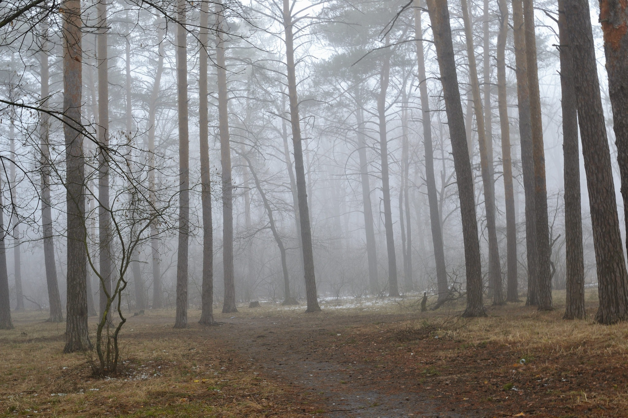 Spring fog in the forest. by Andrey Gordeeff