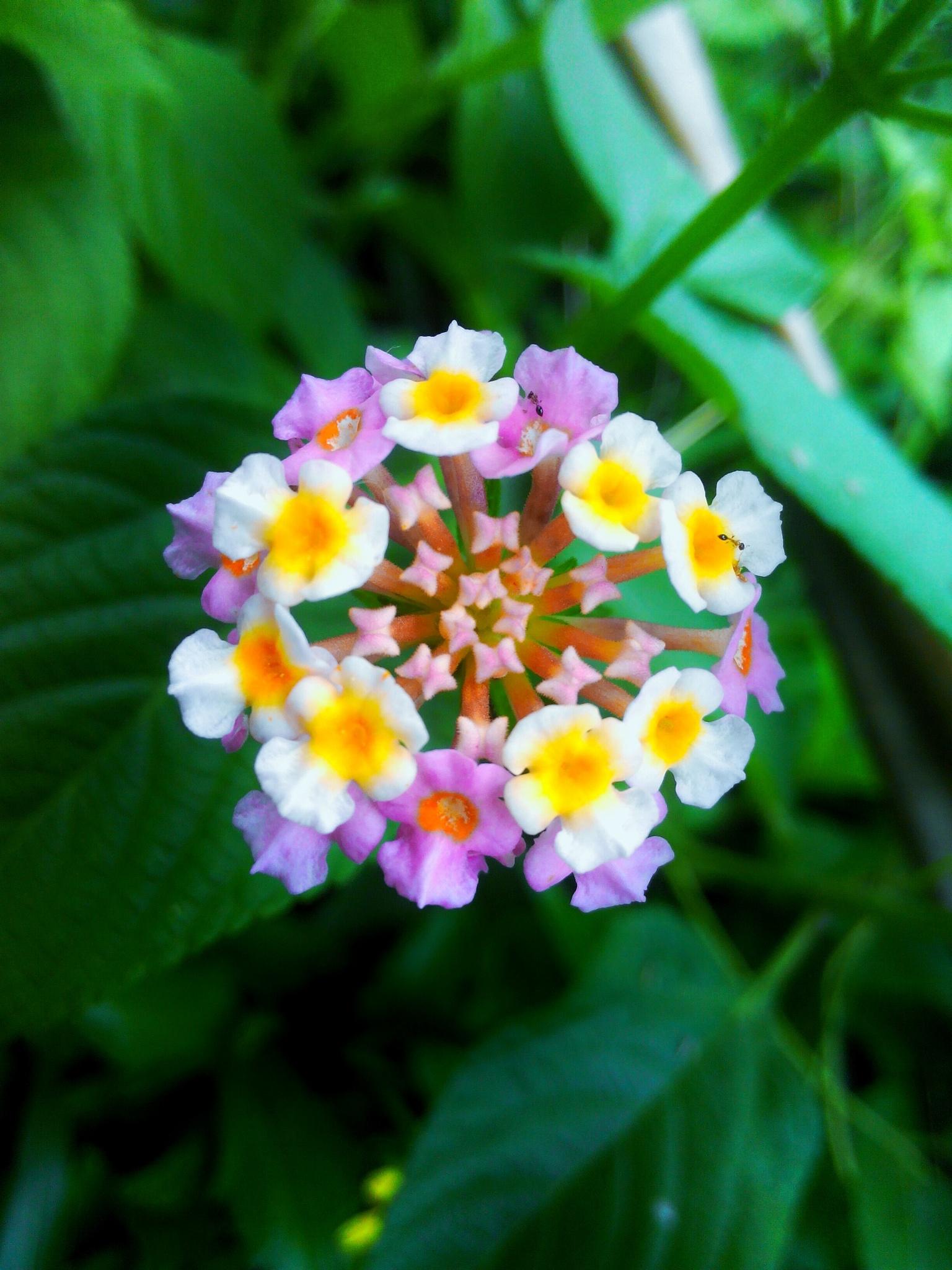 firework flower by arilmagda