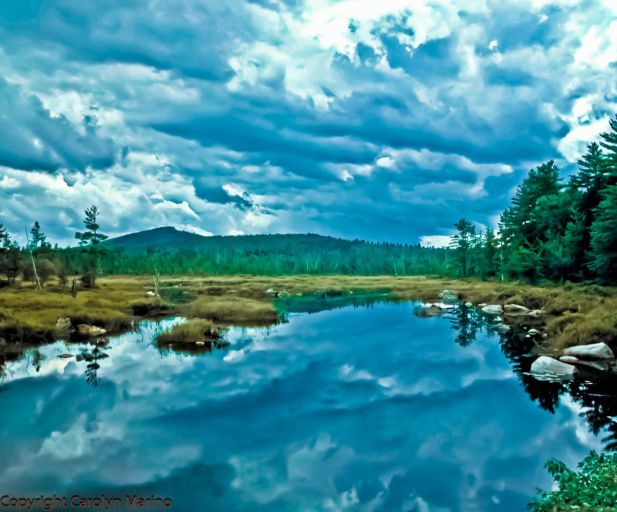 Pond in Maine by Carolyn Marino