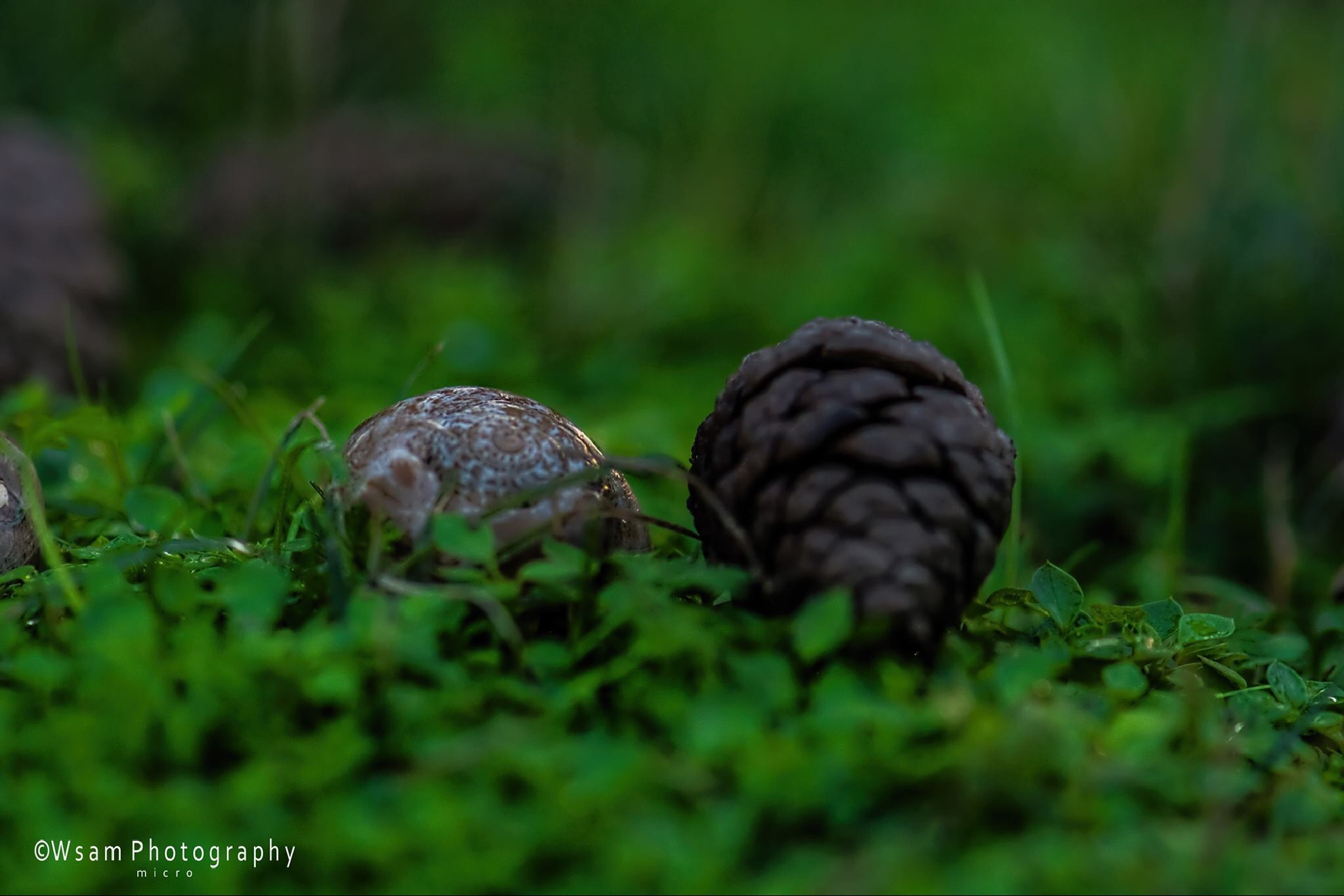 Untitled by wsam photography