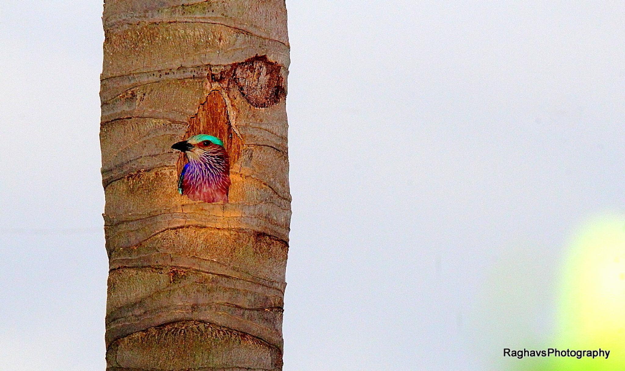 Hiding by Raghavendra Joshi