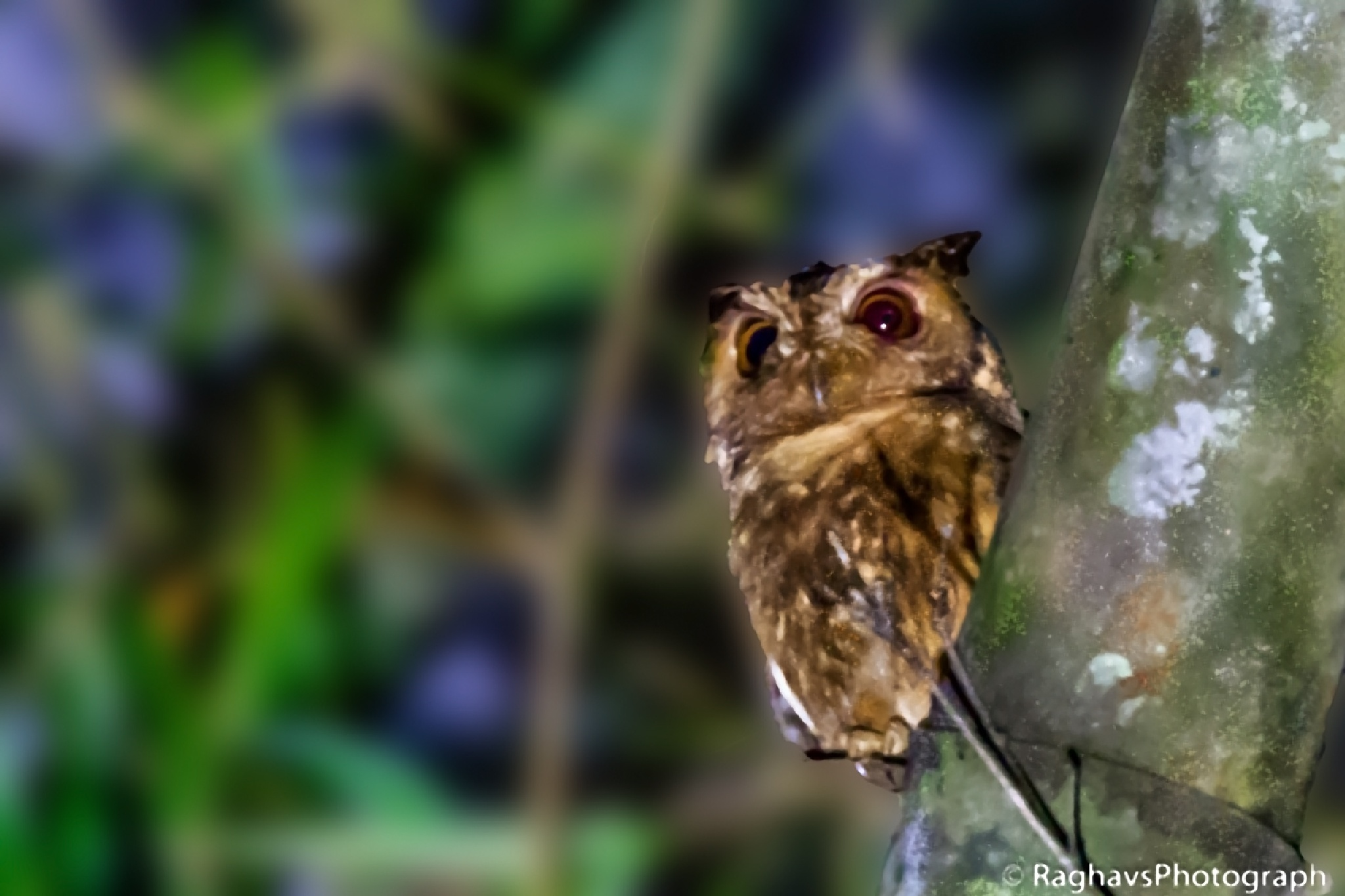 Owl Look by Raghavendra Joshi