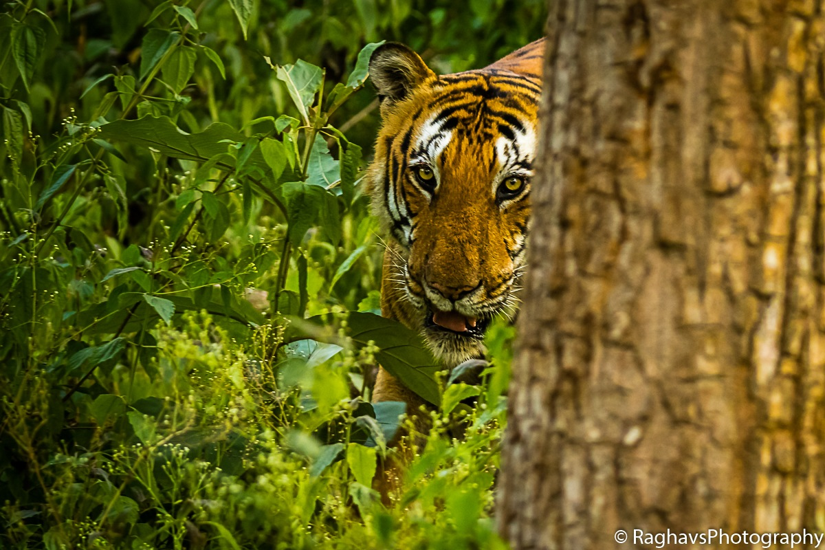 Hide and Seek by Raghavendra Joshi