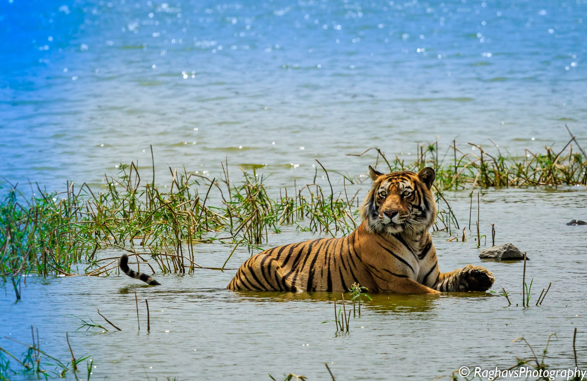 Cooling Off by Raghavendra Joshi