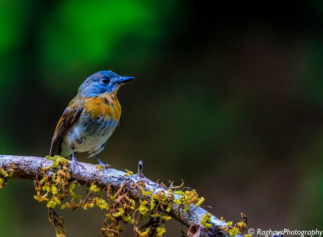 Colorful by Raghavendra Joshi