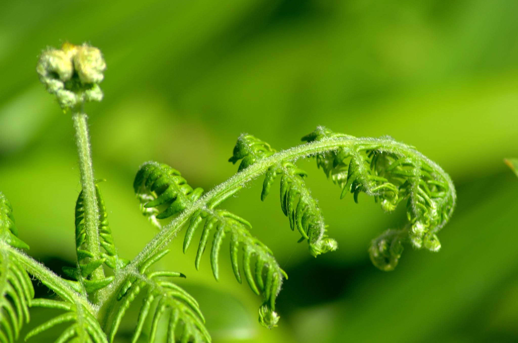 green by Saravanan Veeru