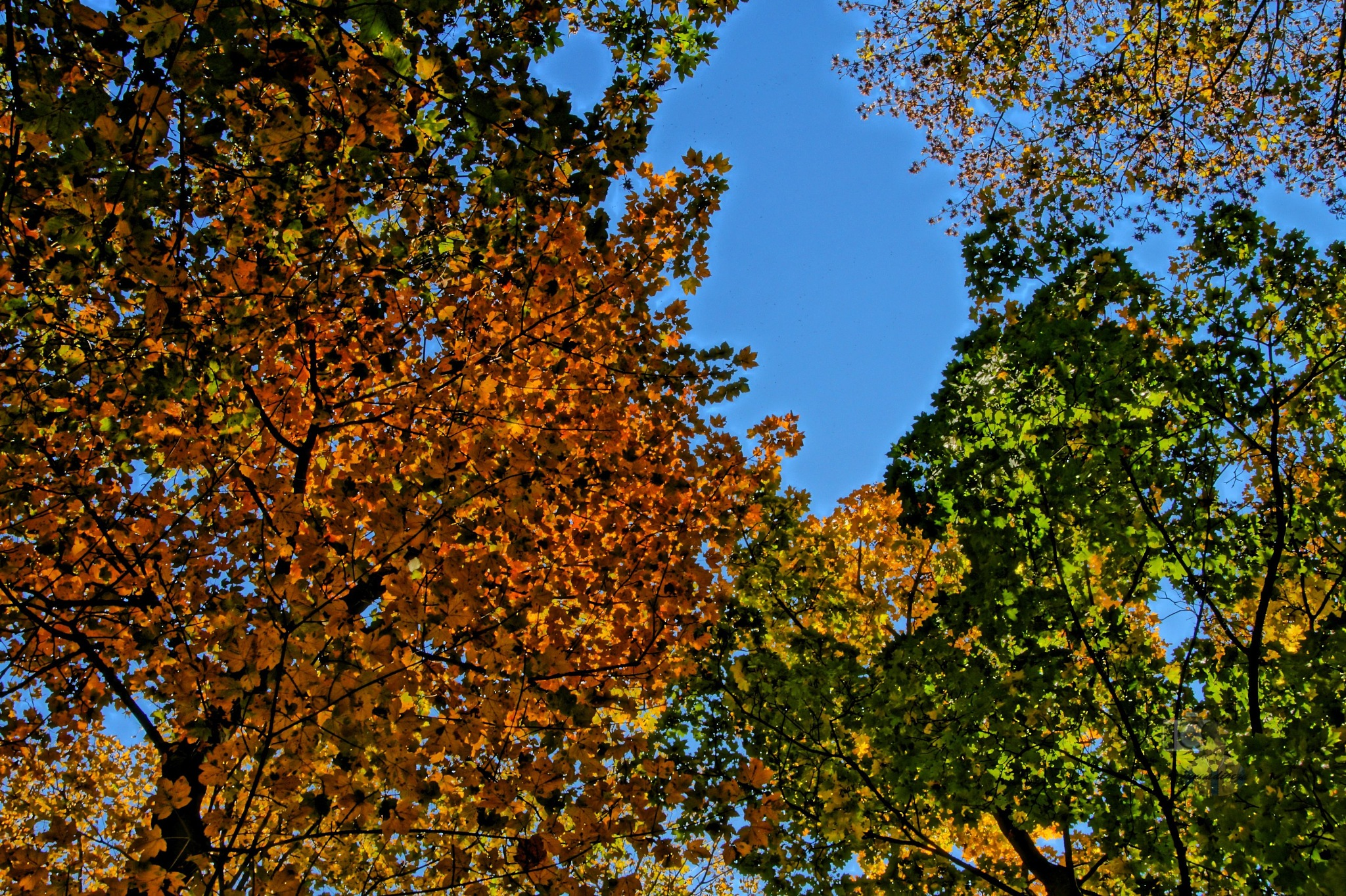 Oct.22, autumn forest HDR #3 by hunyadigeza