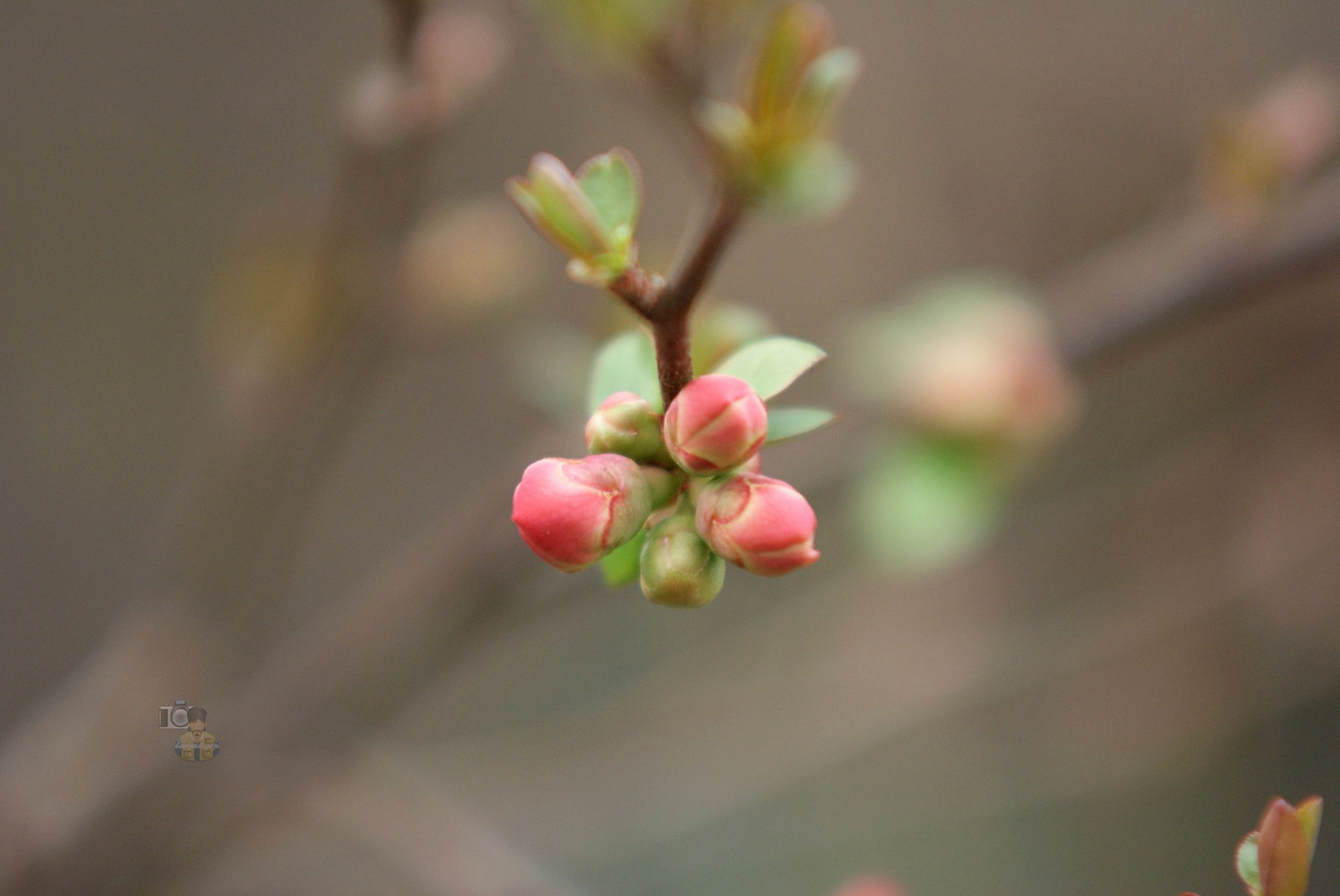 28.02.16. flower bud by hunyadigeza