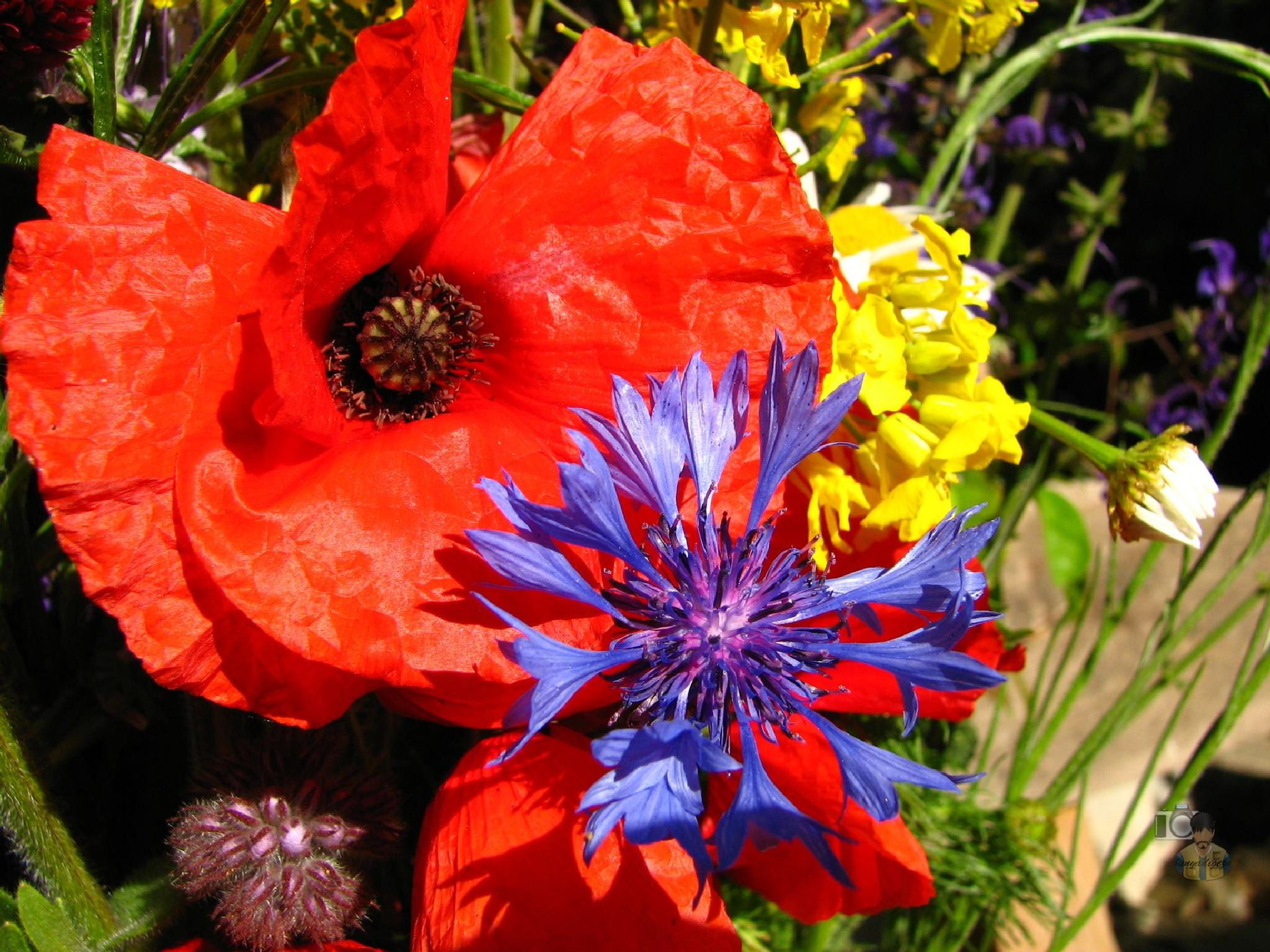 flower bouquet by hunyadigeza