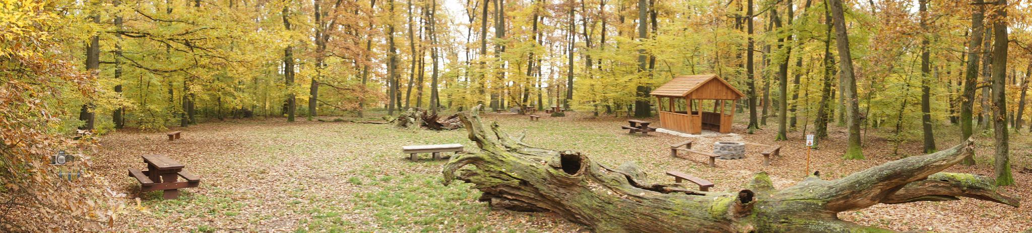 forest landscape with old oak by hunyadigeza