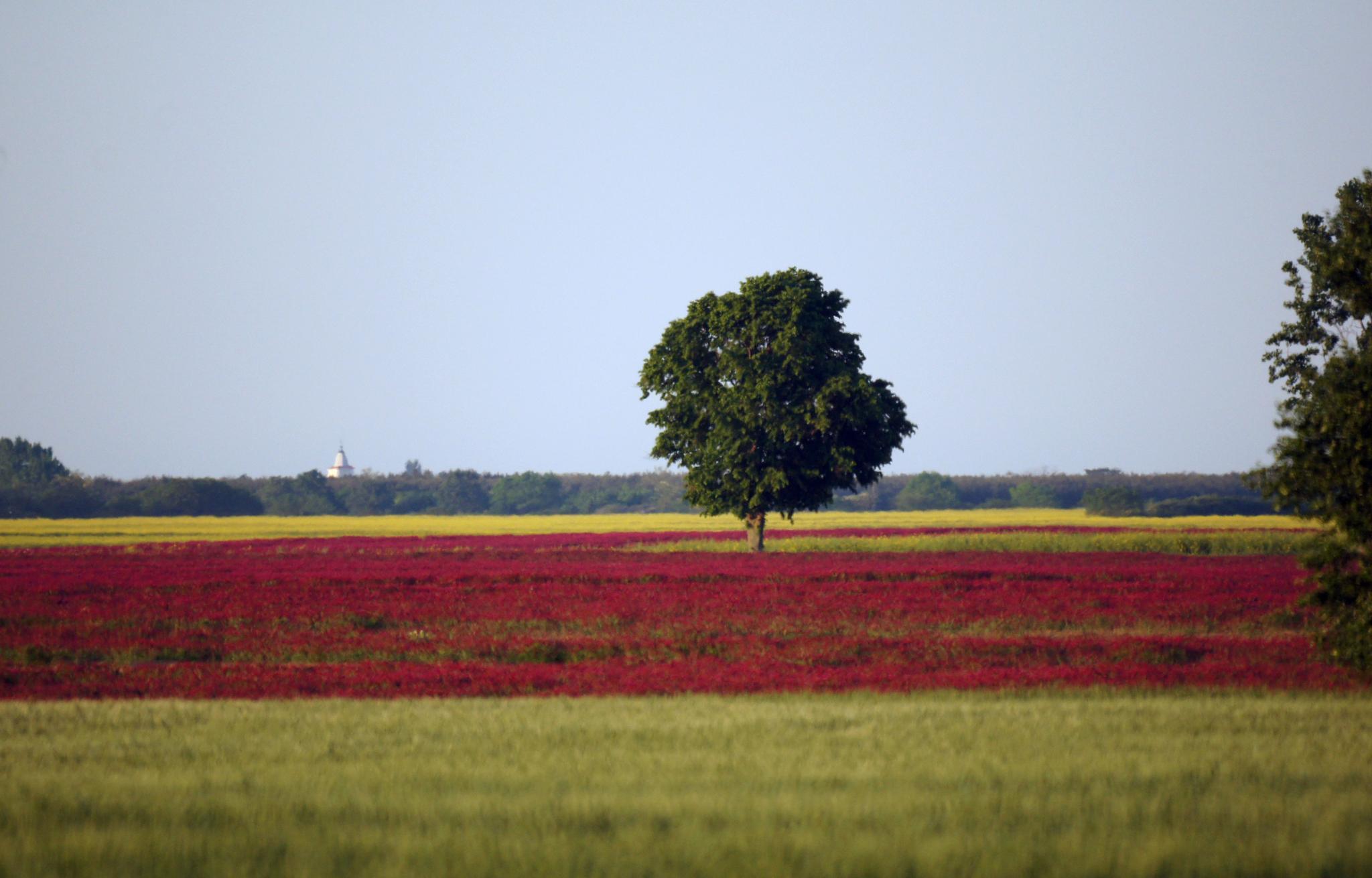 Landscape with purple by hunyadigeza
