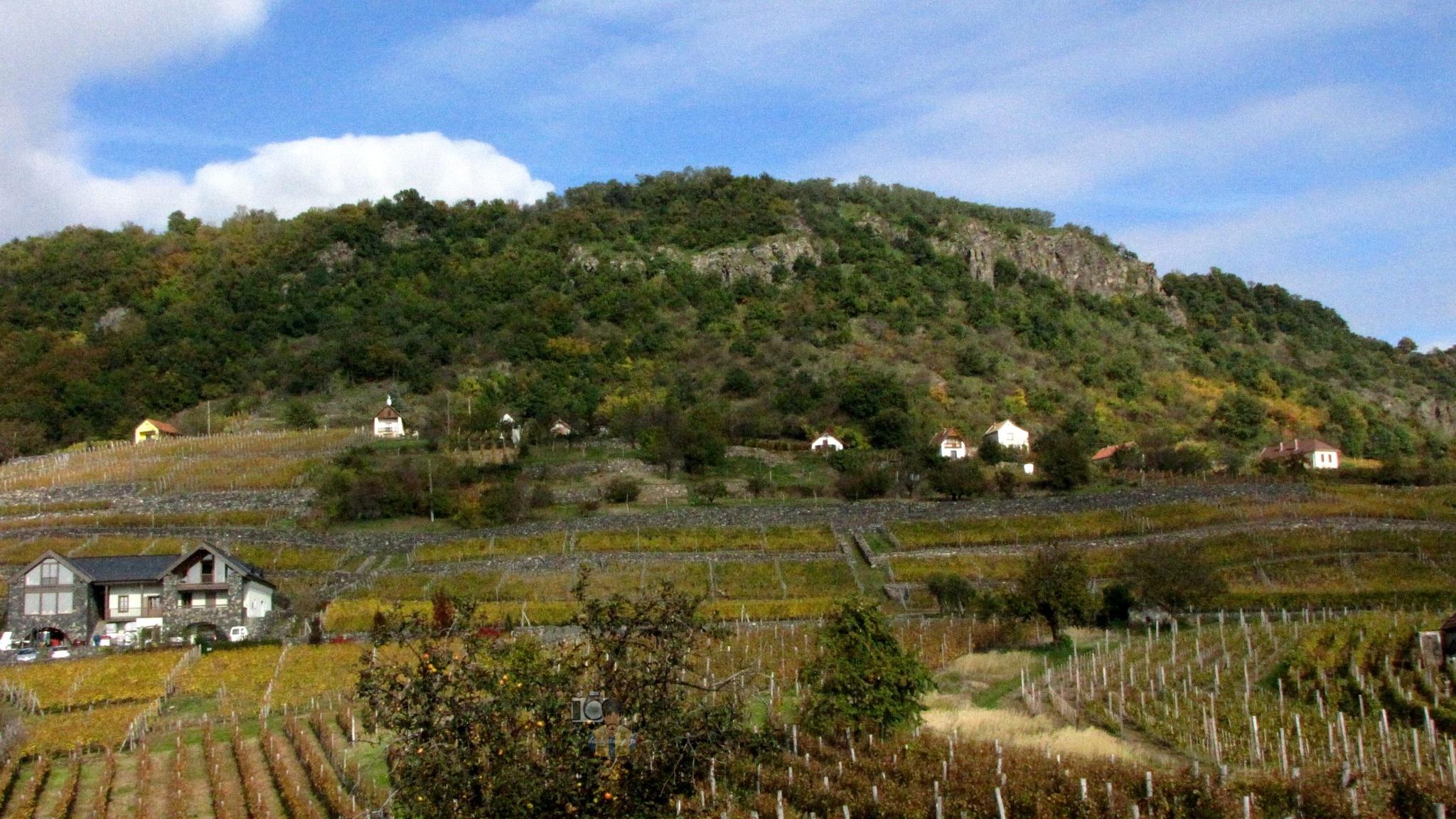 Somlo Wine Region, the Somlo Mountain, North-West Hungary #1 by hunyadigeza