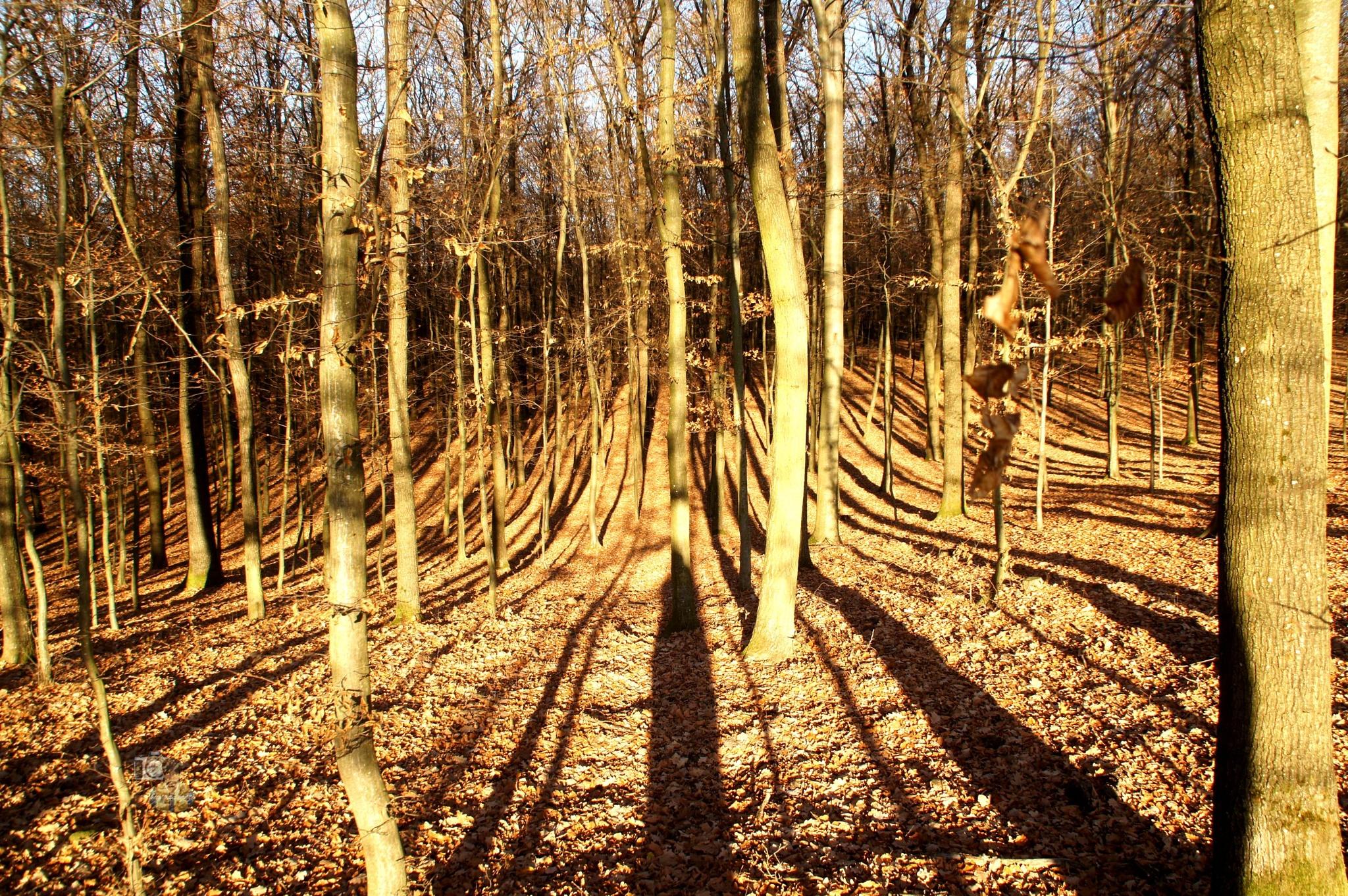 long shadows by hunyadigeza