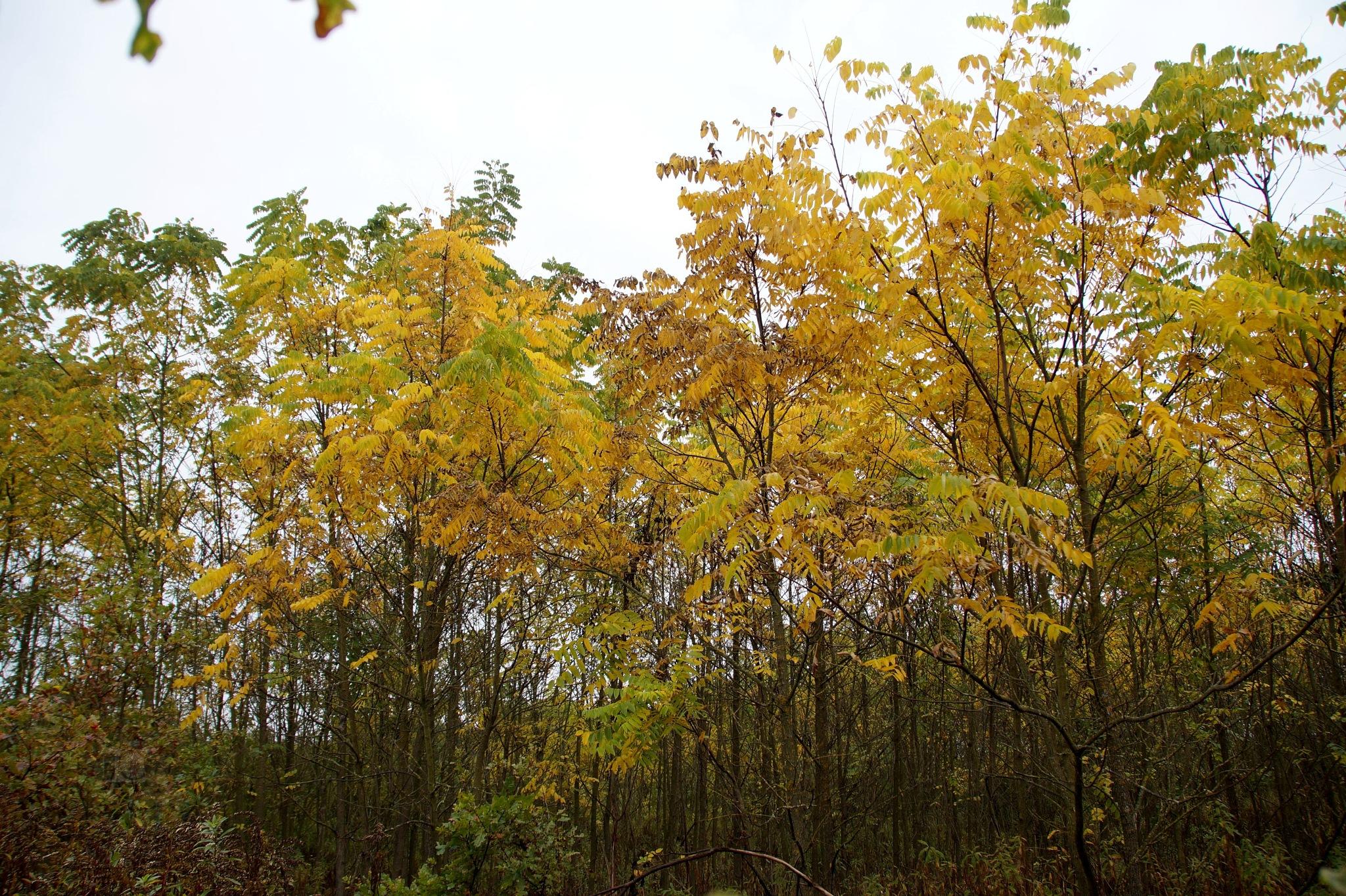 Oct.10, autumn forest by hunyadigeza