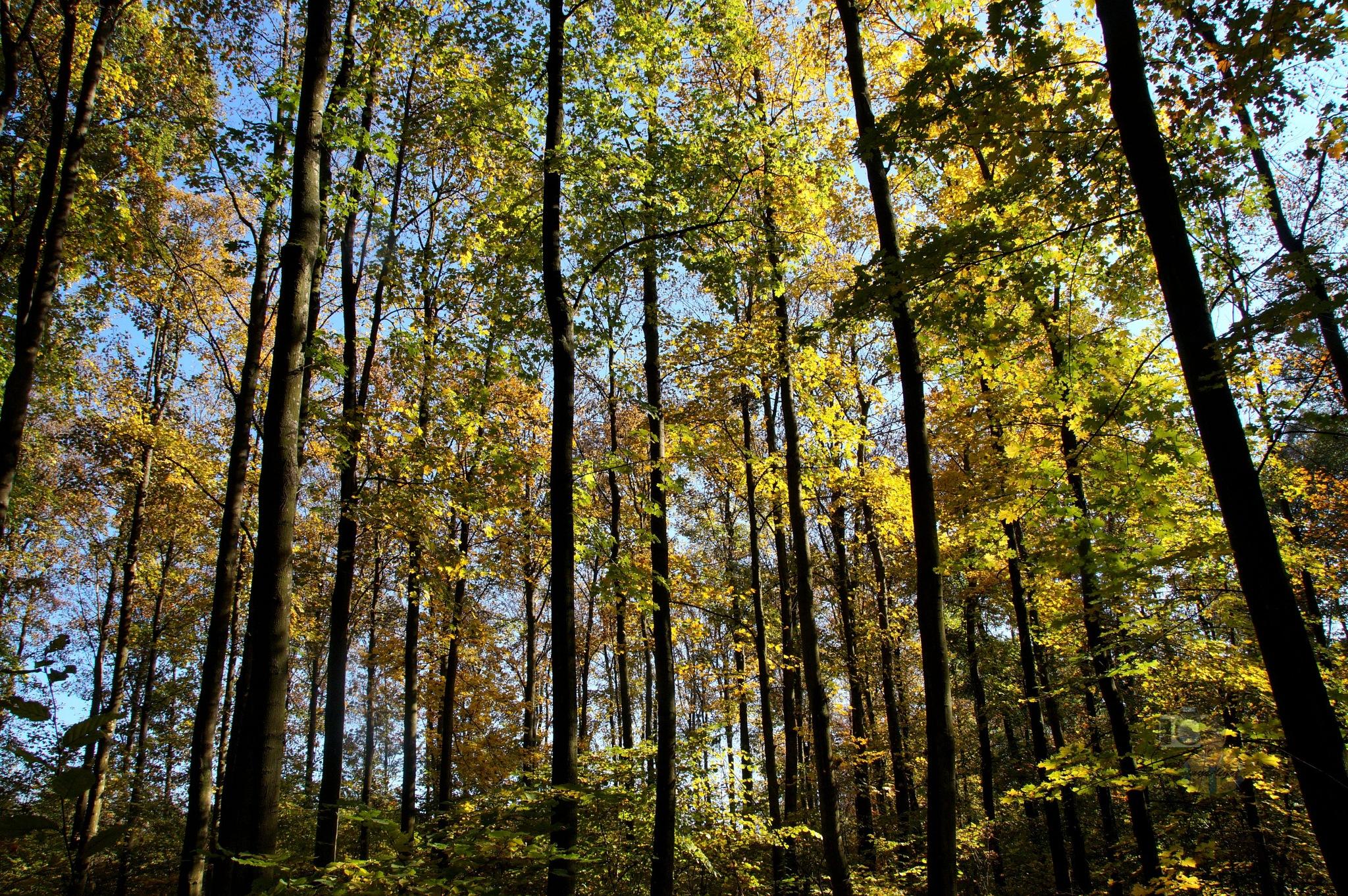 Oct.22, autumn forest #4 by hunyadigeza