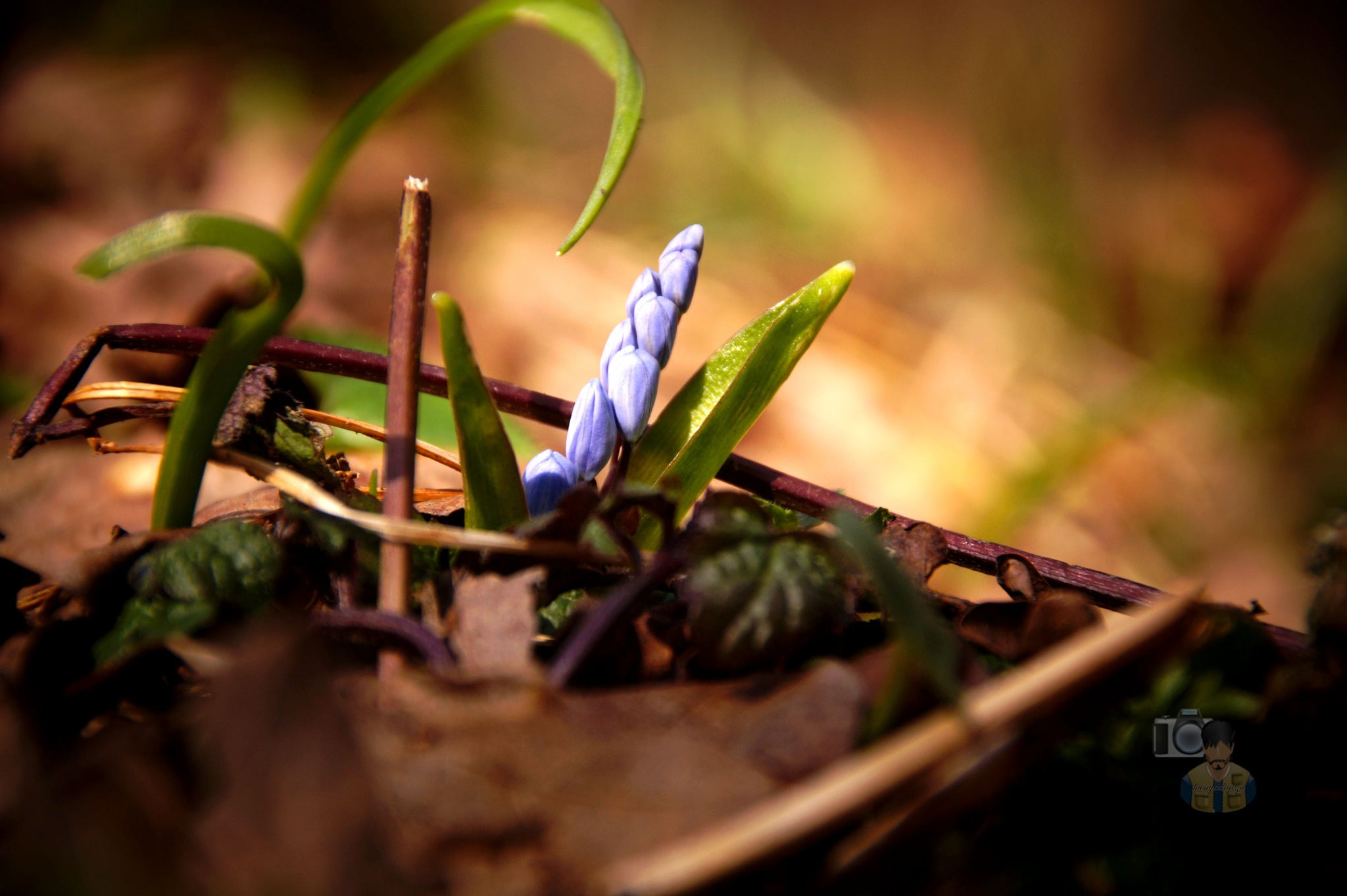 Mar.10, springtime in forest #1 by hunyadigeza