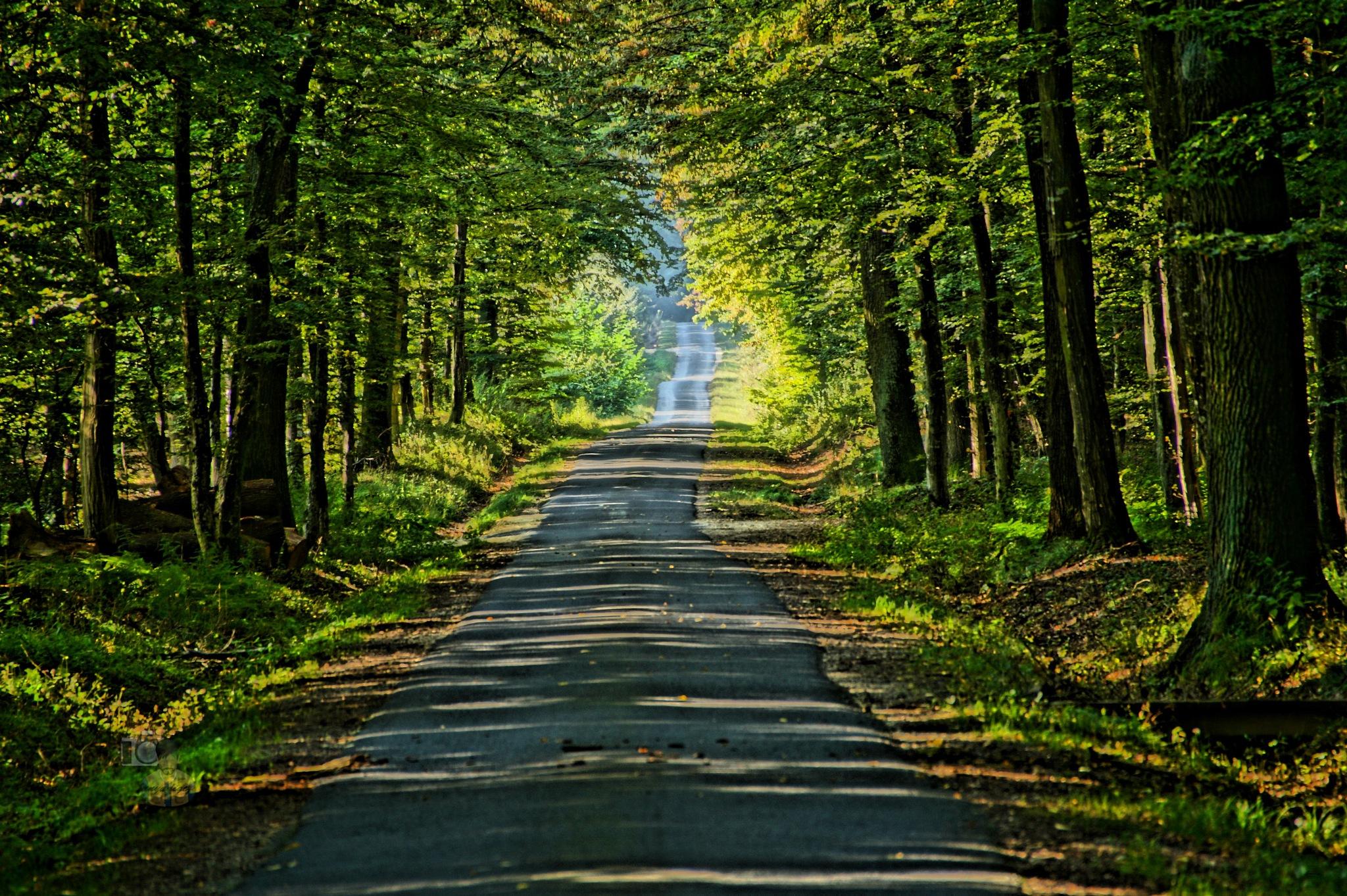 Sep.14, Forest Way HDR by hunyadigeza