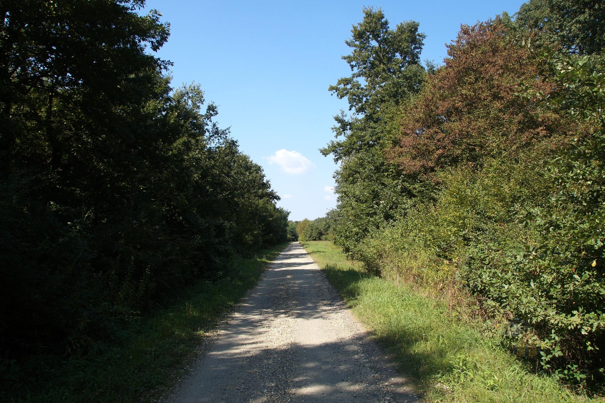 Sep.14, Forest Way #2 by hunyadigeza