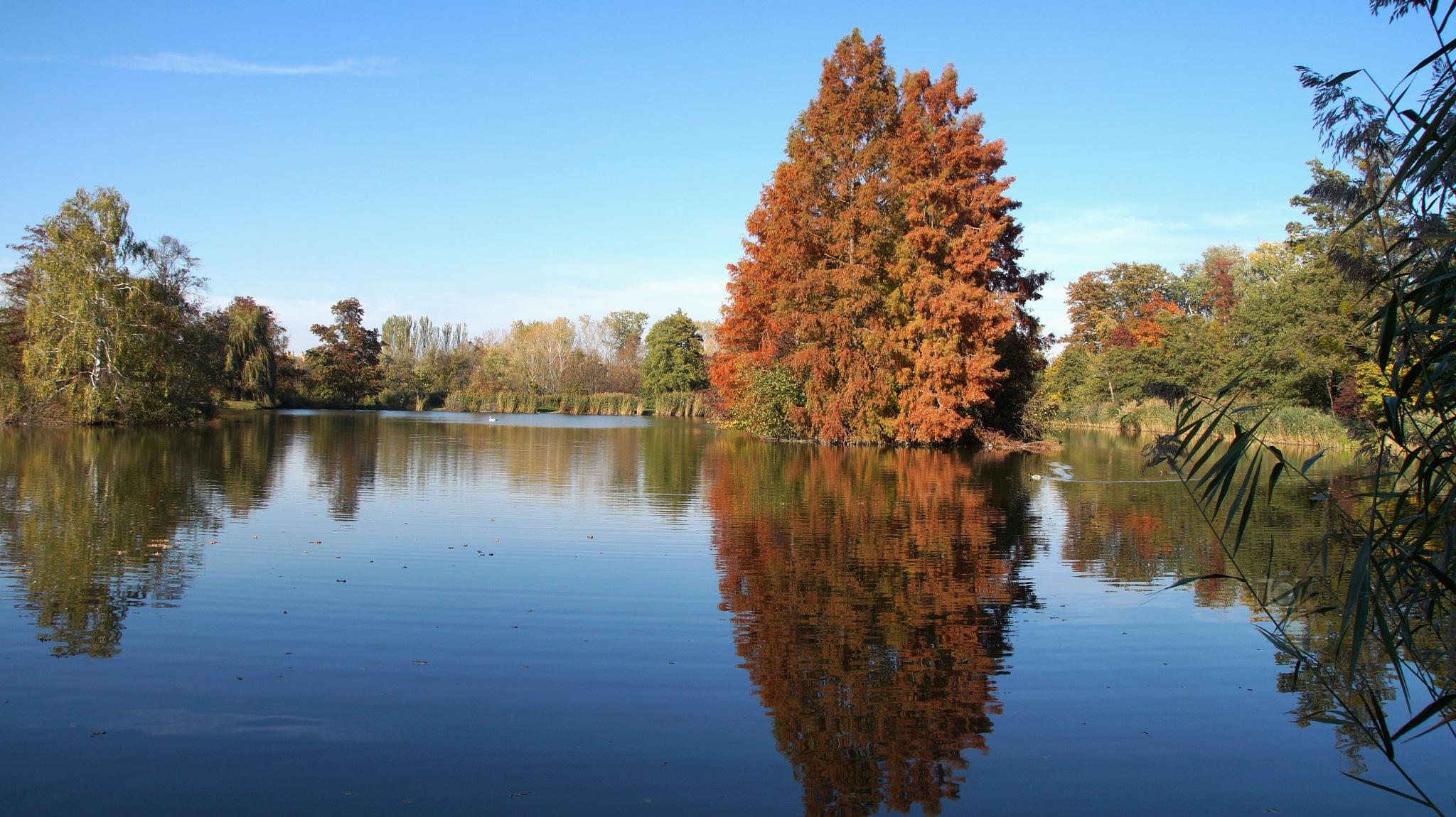 Oct.18, autumn in city park #2 by hunyadigeza
