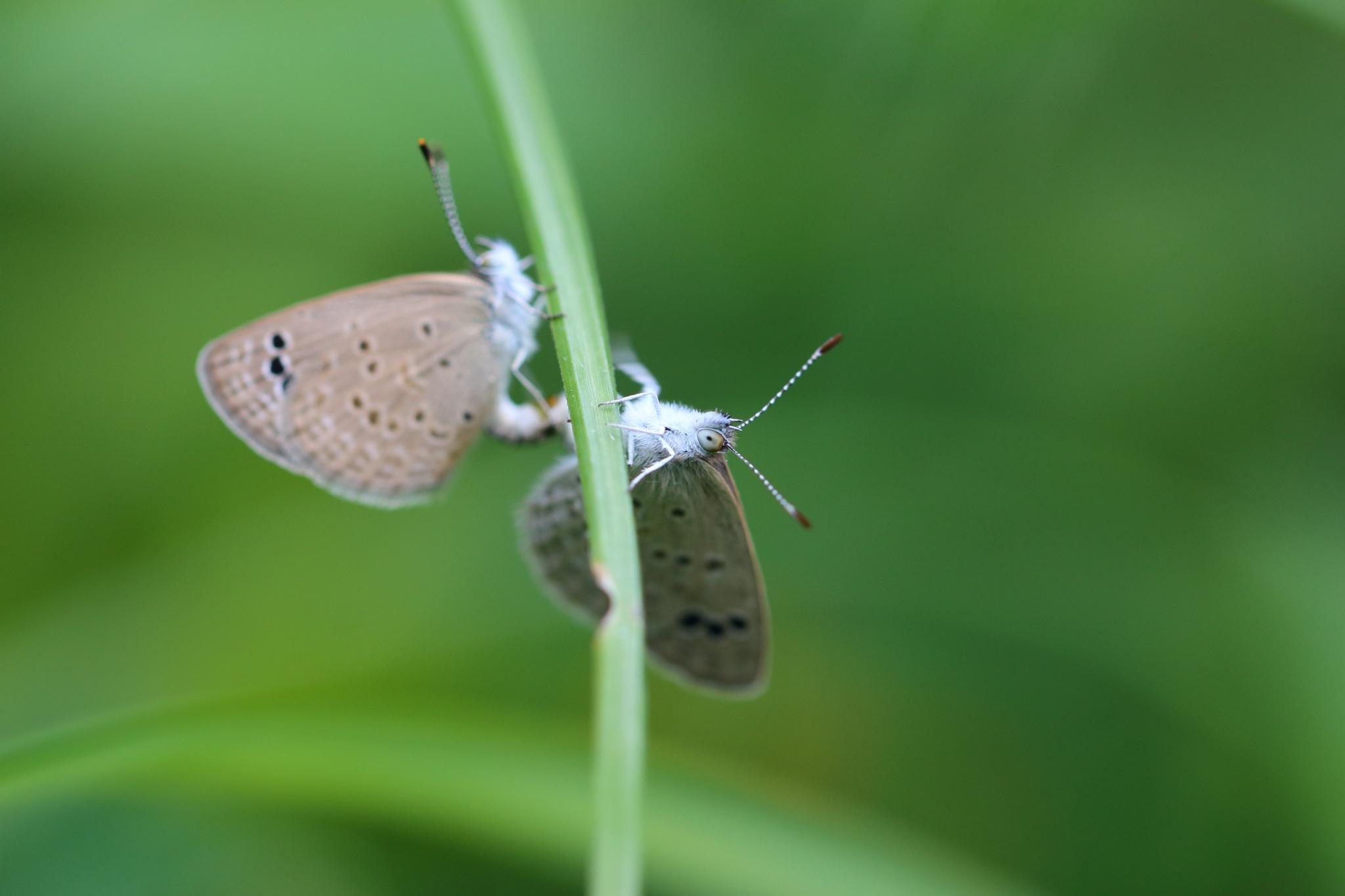 Green's Mating :) by Abhiram Cuntoor