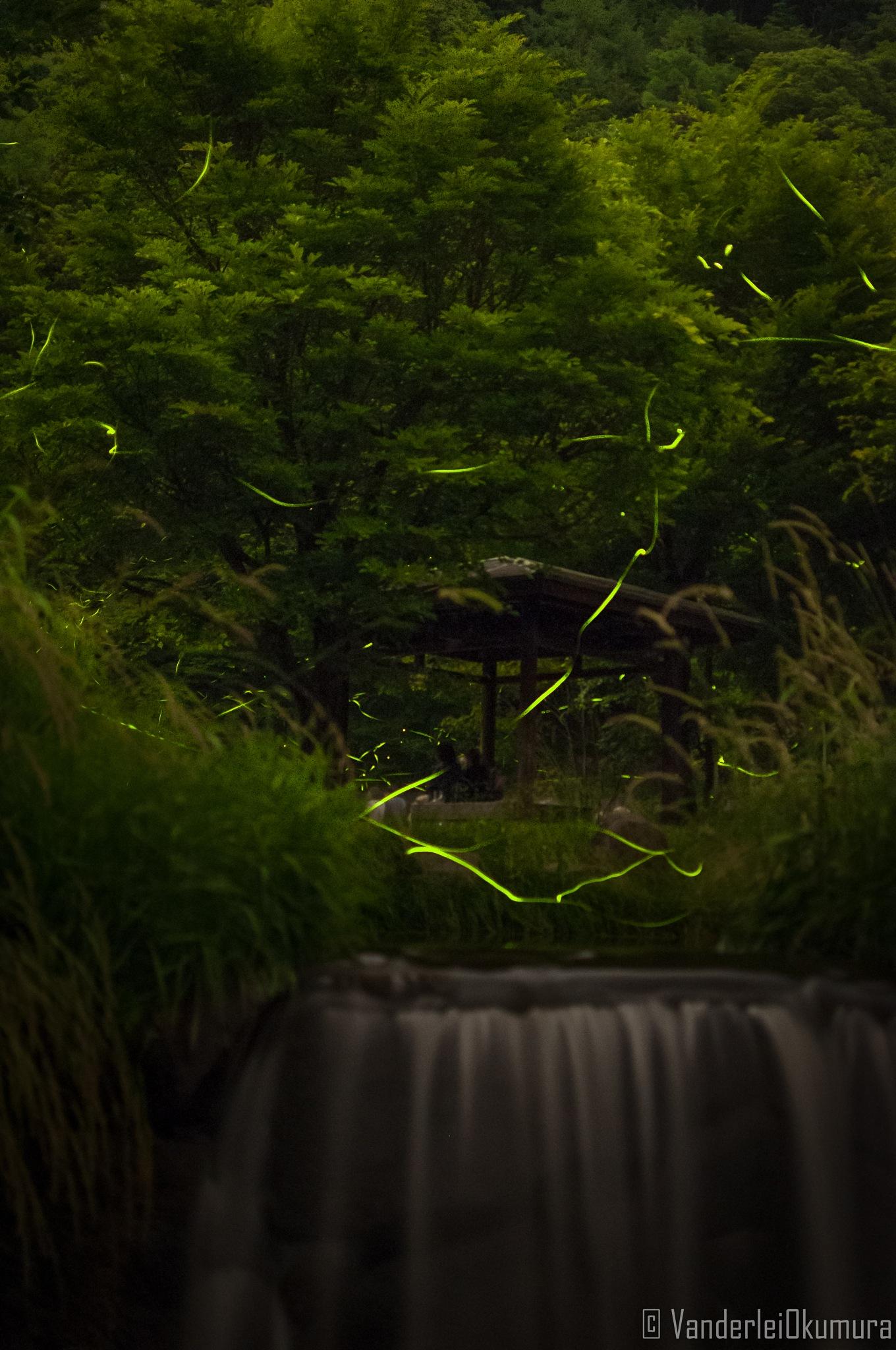 firefly by Vanderlei Okumura