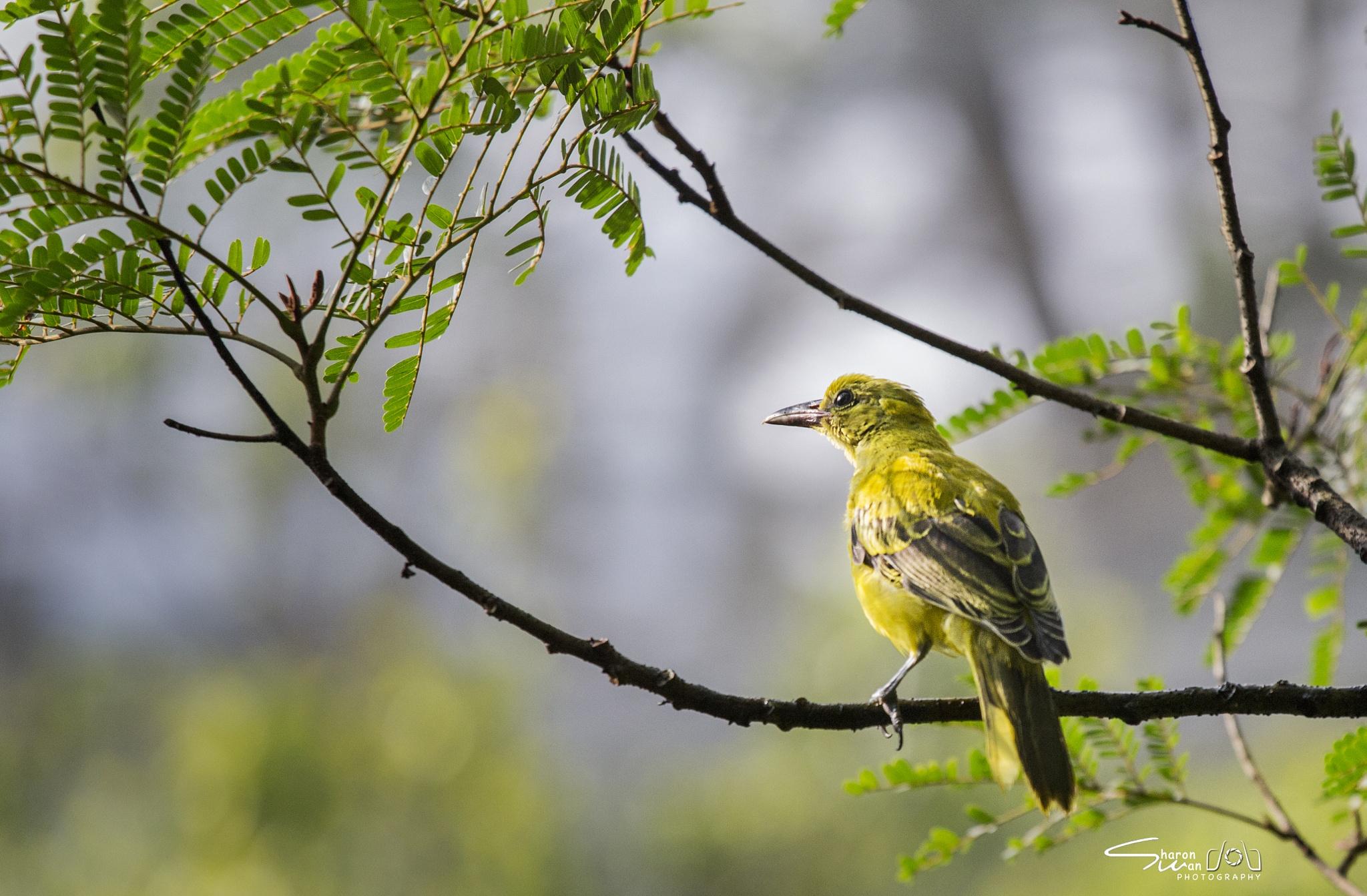 Bird by Sharon Wan
