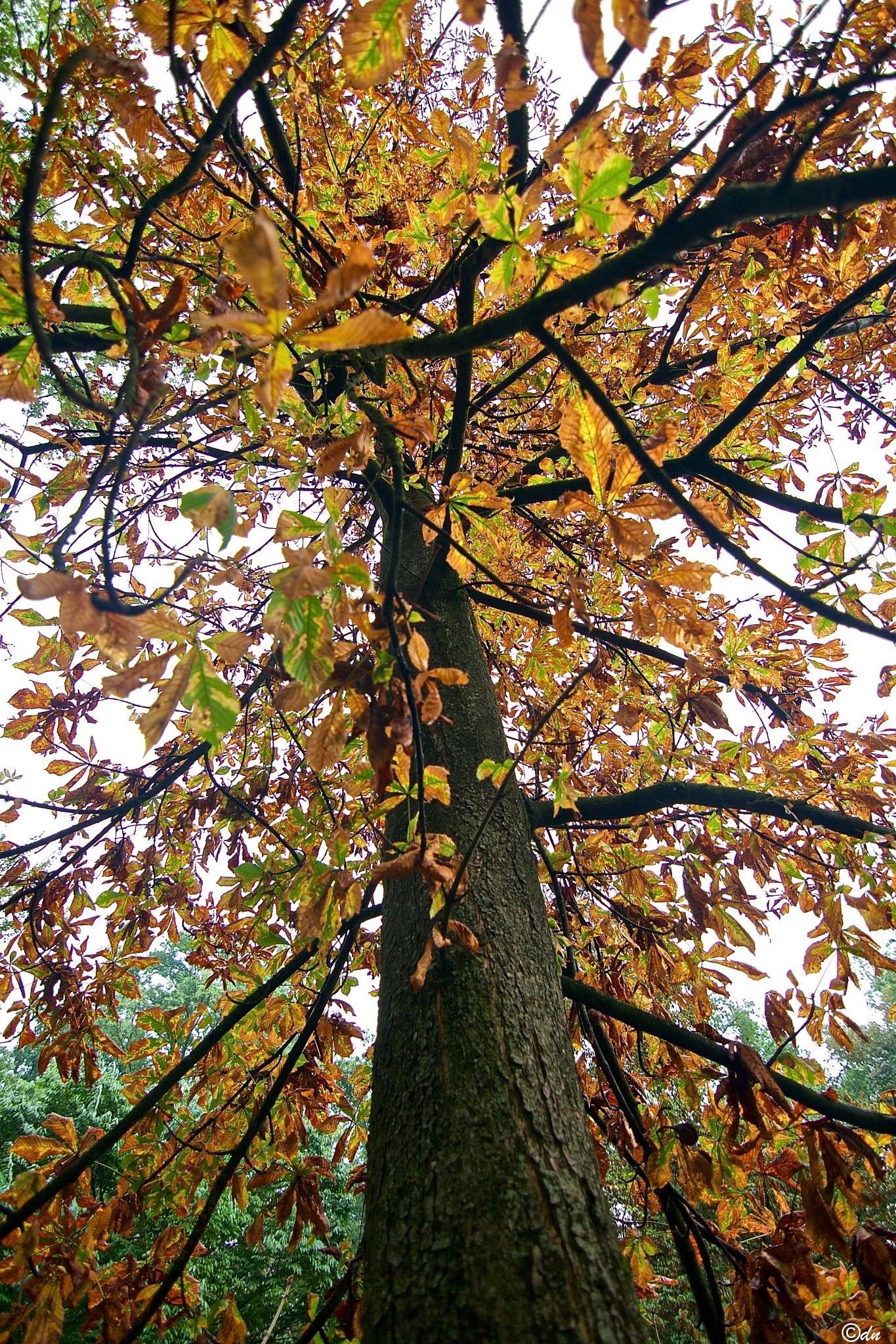 albero by DavideNegro