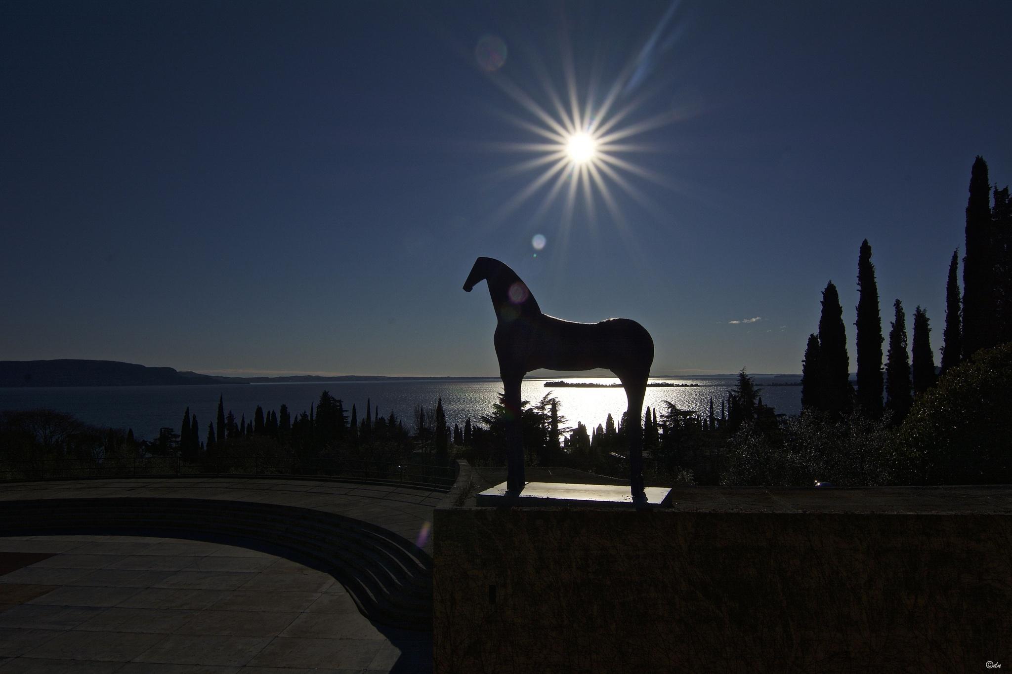 cavallo by DavideNegro