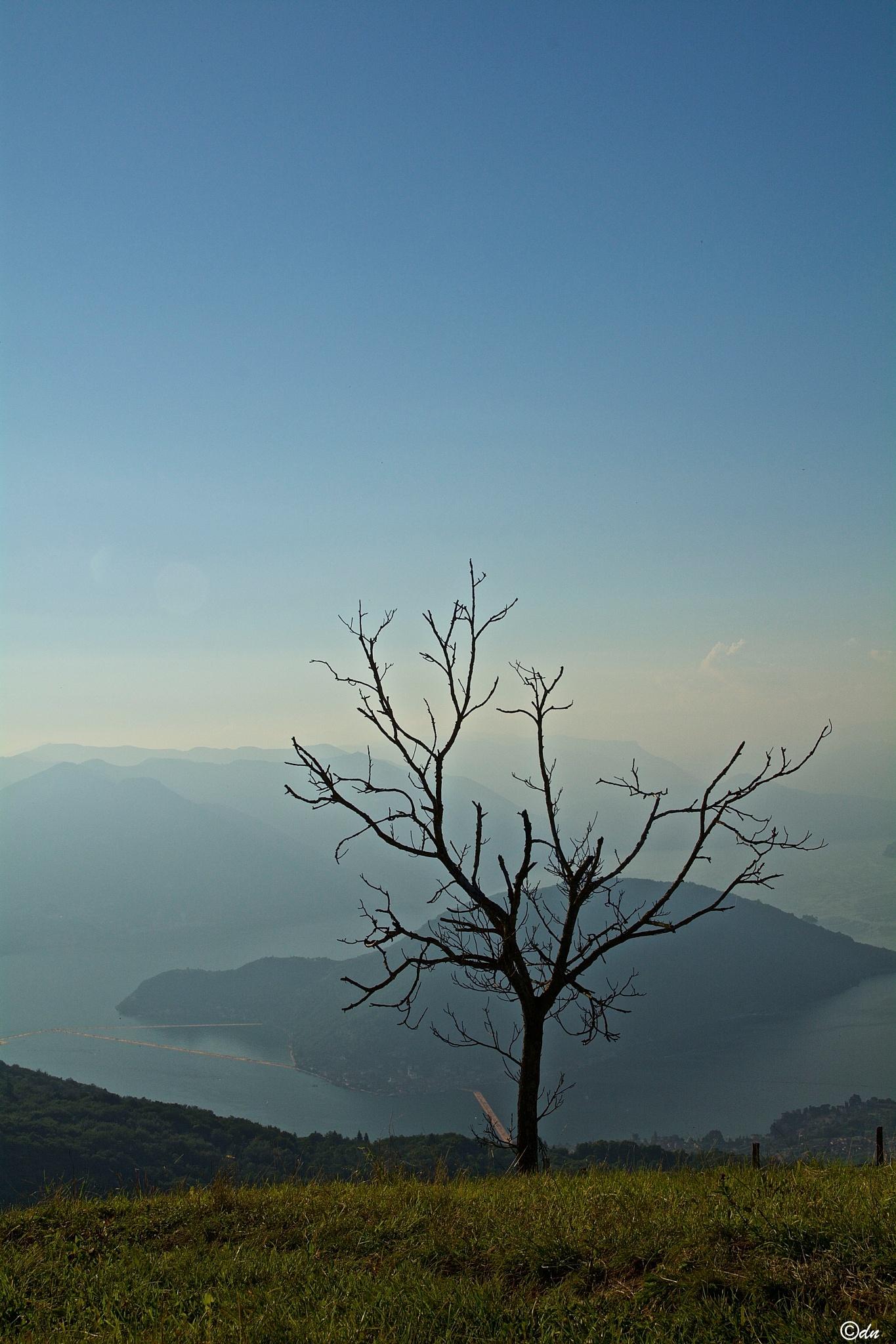 solo by DavideNegro